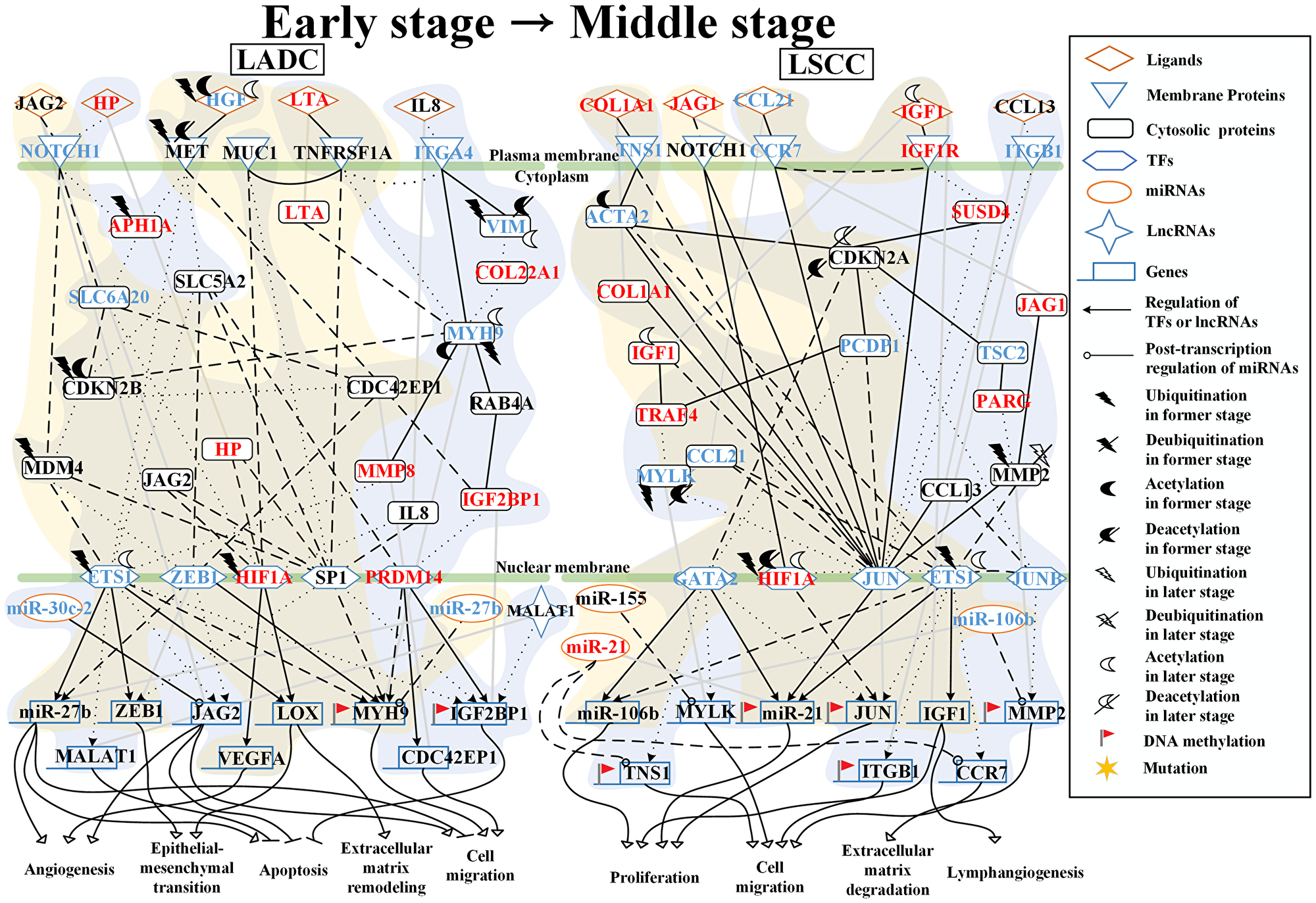 Core signaling pathways extracted from comparing genetic and epigenetic networks (GENs) between early stage and middle stage LADC and LSCC.