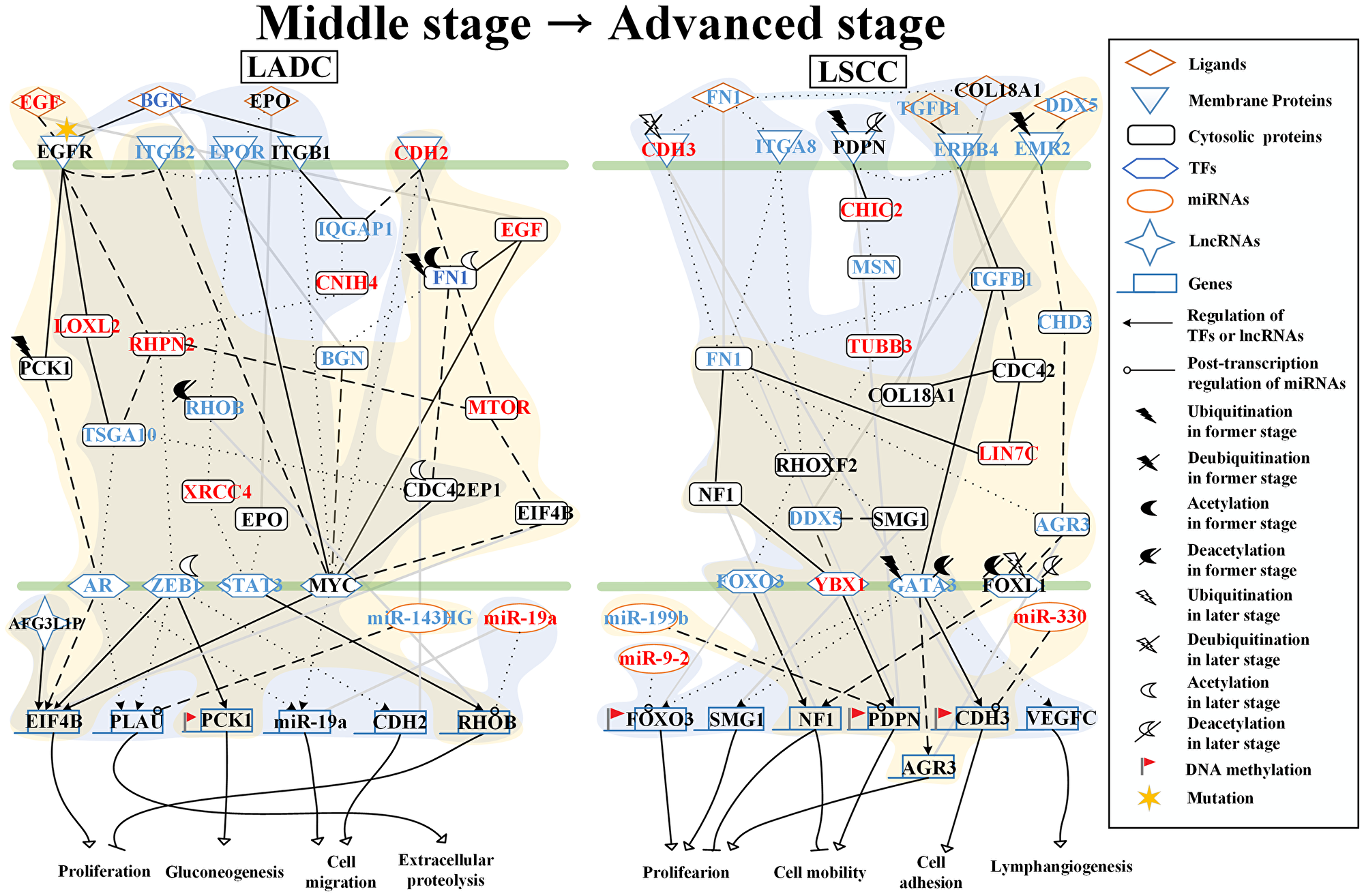 Core signaling pathways extracted from comparing genetic and epigenetic networks (GENs) between middle stage and advanced stage LADC and LSCC.