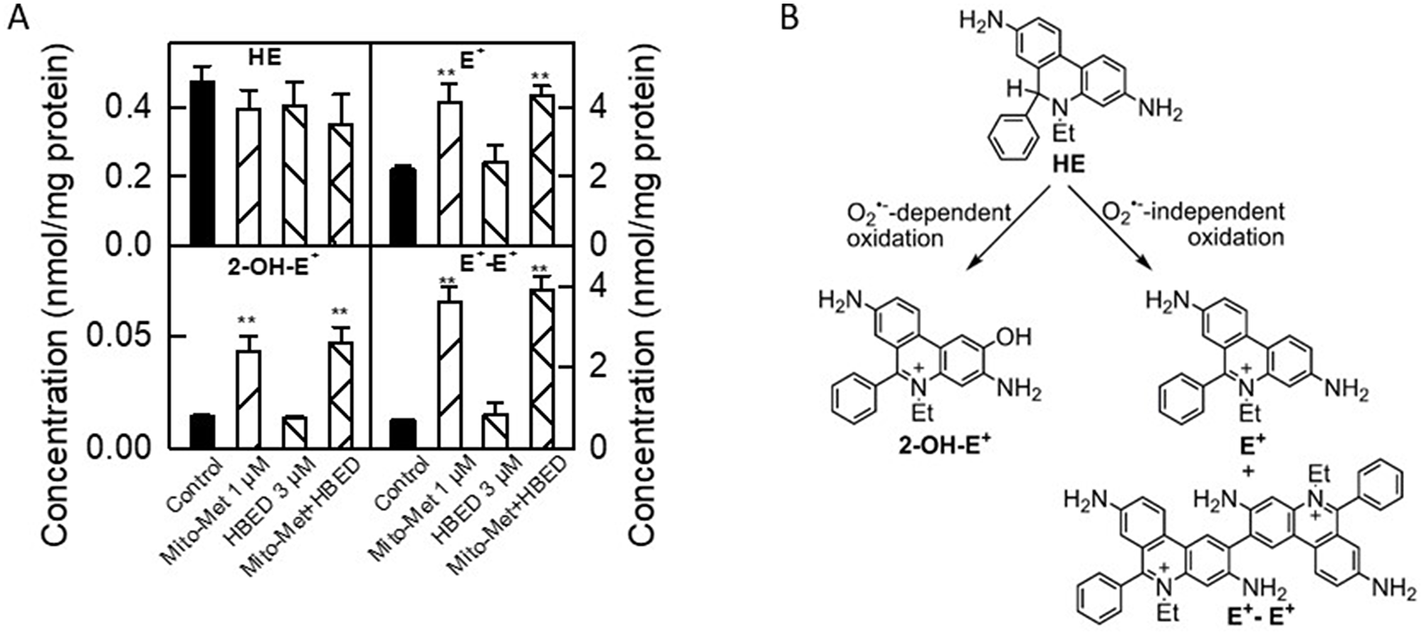 Characterization of intracellular oxidants induced by Mito-Met and HBED in MiaPaCa-2 cells.