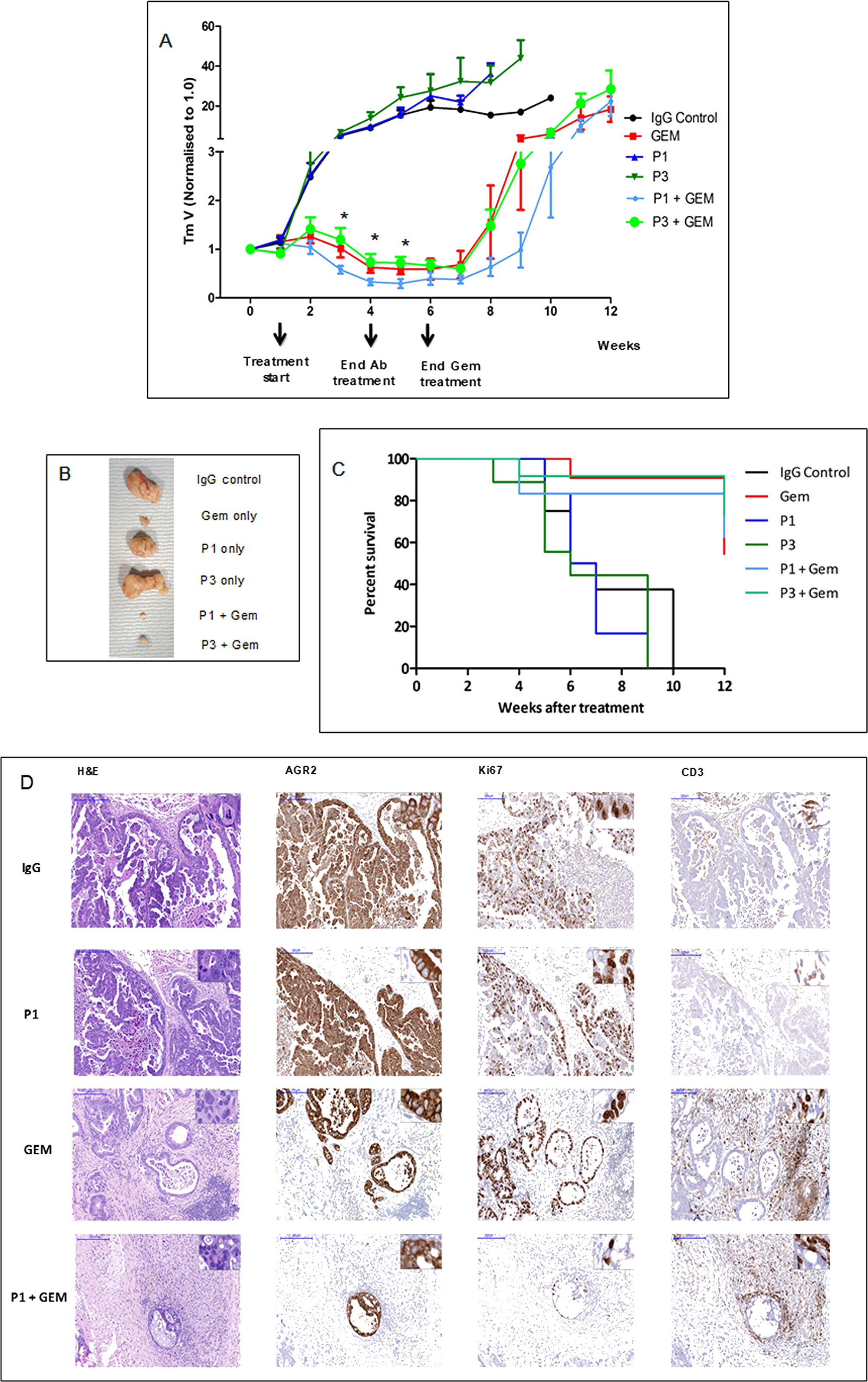 Tumor growth inhibition by drug in combination with antibodies.