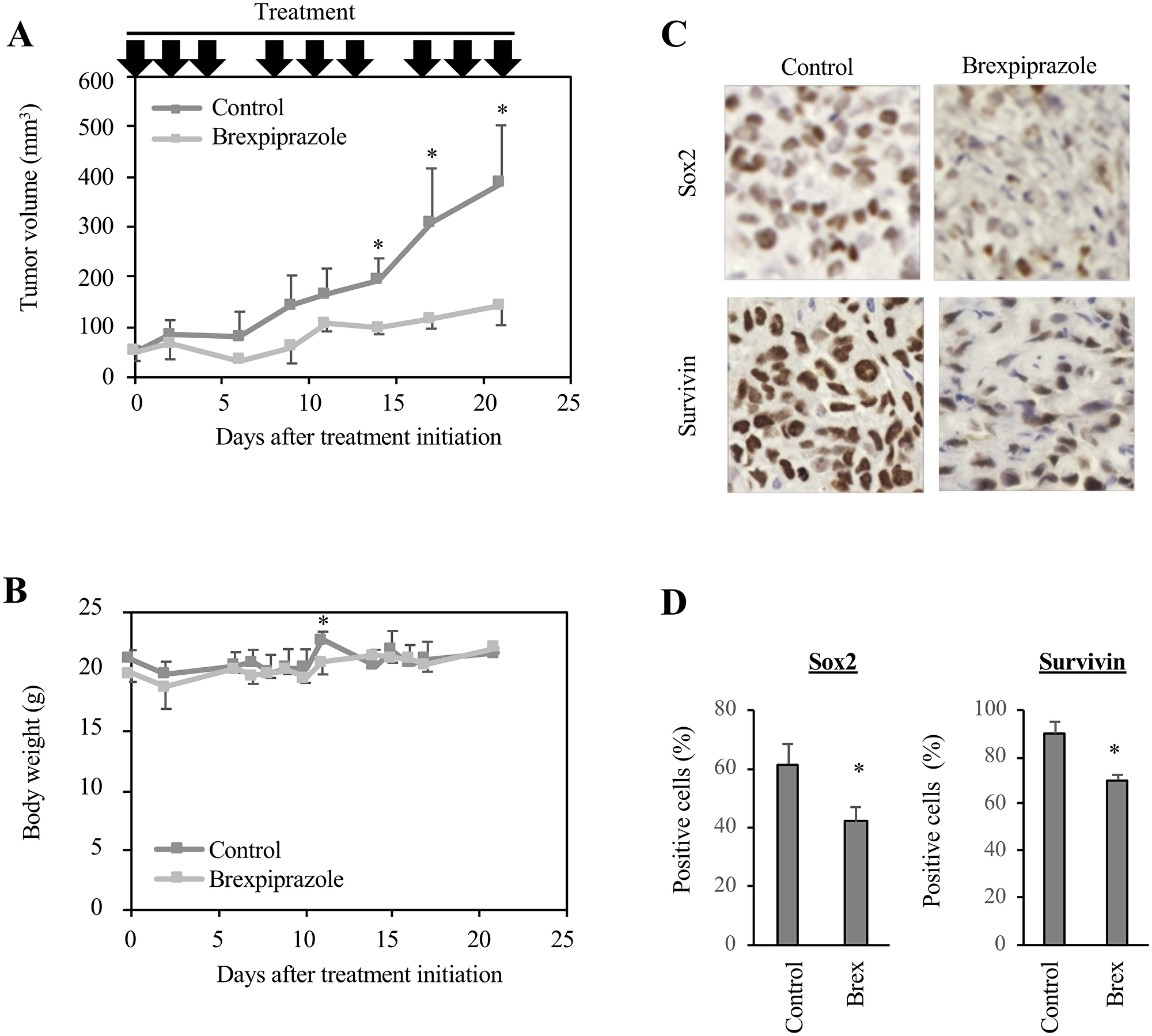 Brexpiprazole suppresses tumor growth in vivo and reduces the expression of Sox2 and survivin.