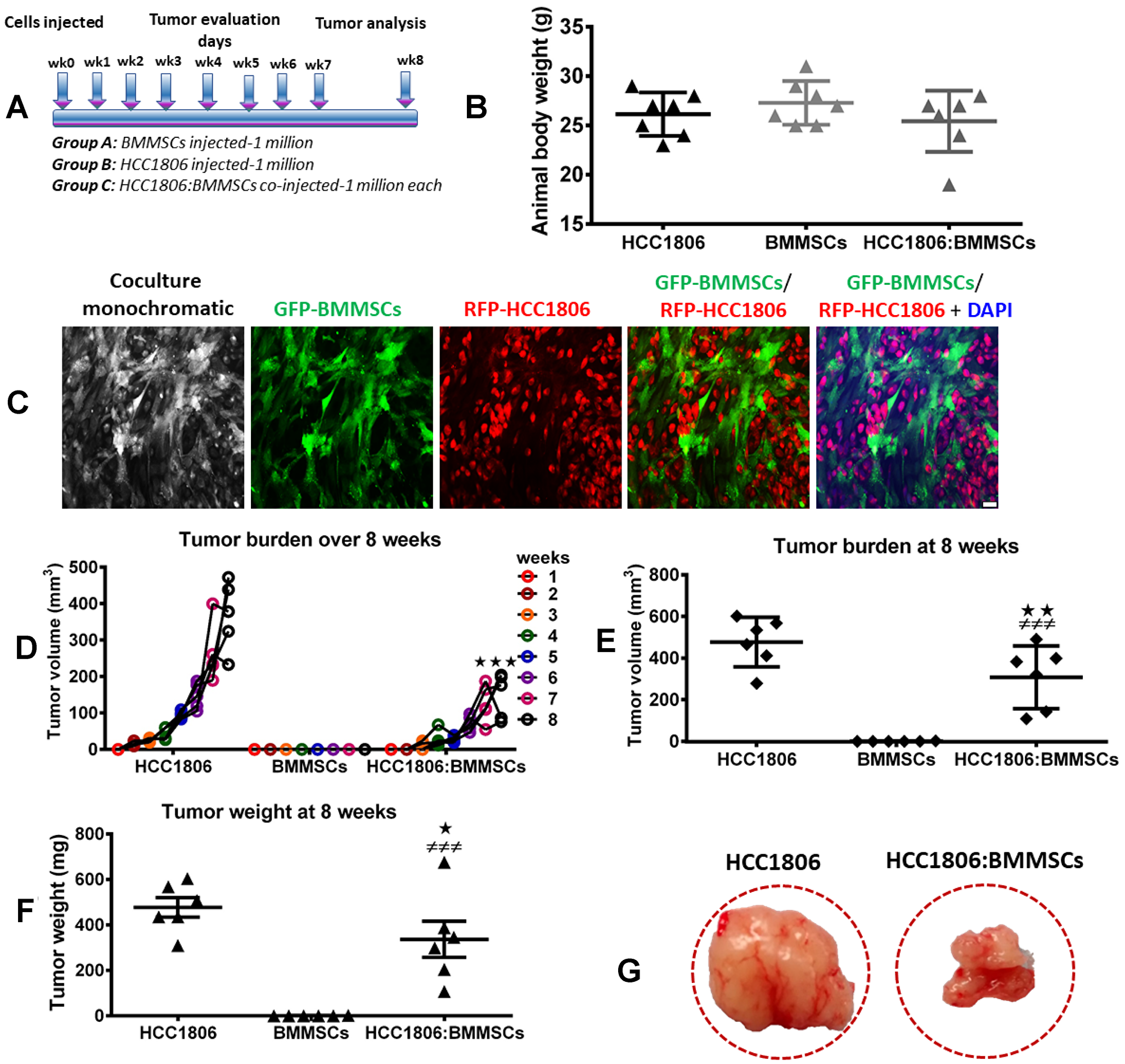 BMMSCs reduce tumor burden of HCC1806 xenografts in vivo.