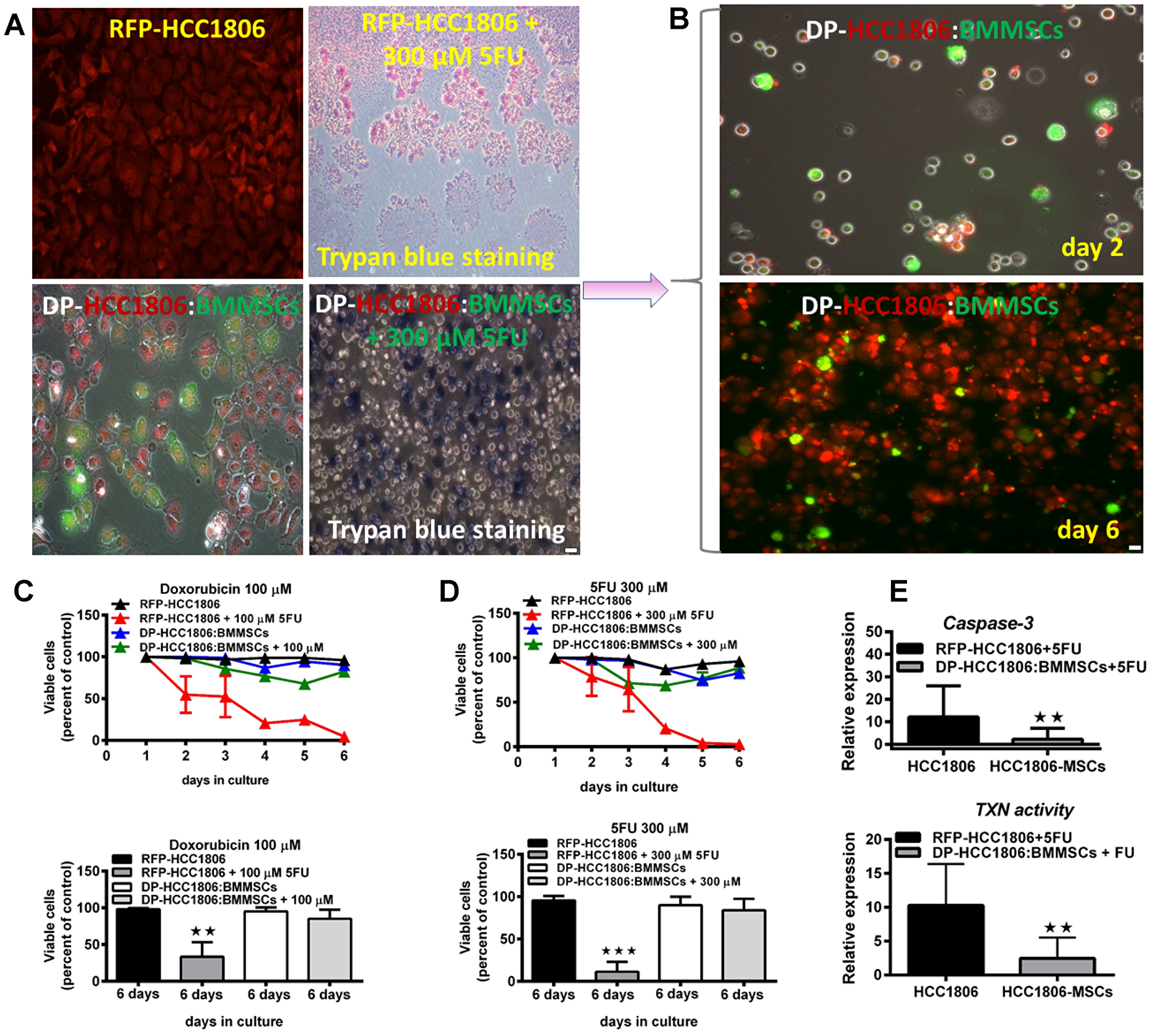 Increased cell viability and reduced cytotoxicity underlie chemoresistance to doxorubicin and 5FU.