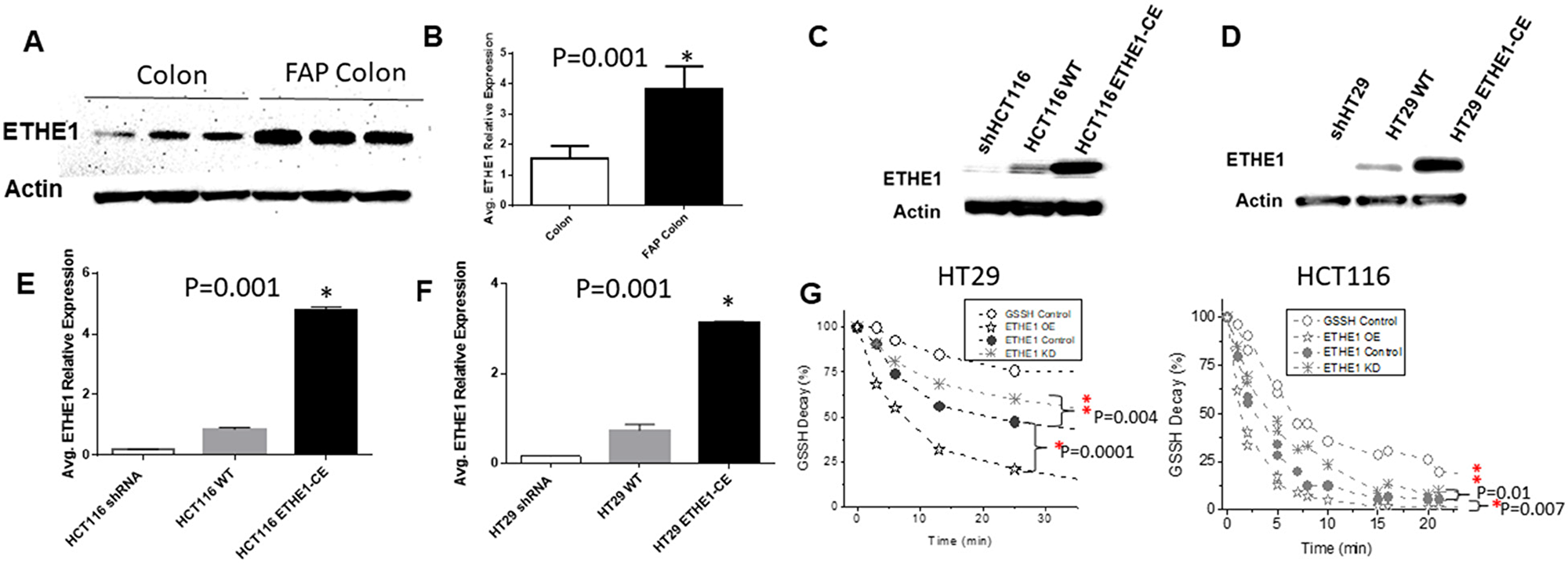 Increased ETHE1 expression and Activity in FAP and CRC.