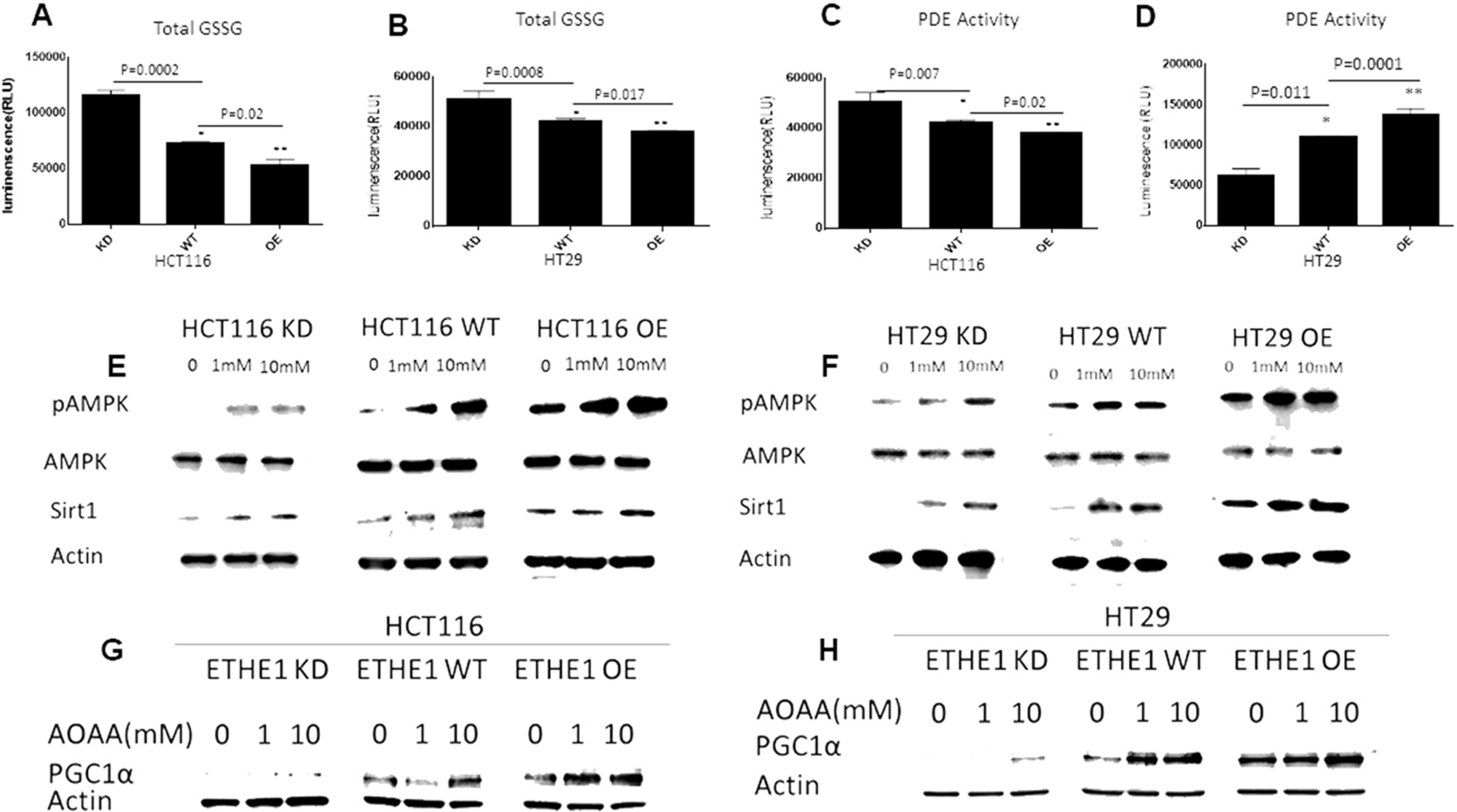 ETHE1 levels drive PDE mediated stimulation of pAMPK/Sirt1.