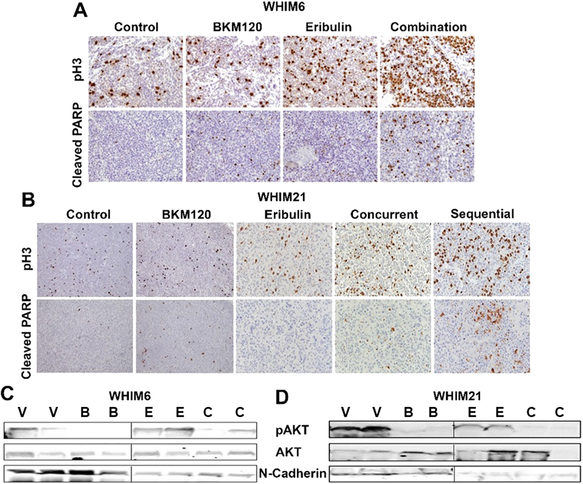 Eribulin in combination with BKM120 induces more apoptosis, mitotic cell cycle arrest and target inhibition in TNBC PDXs.