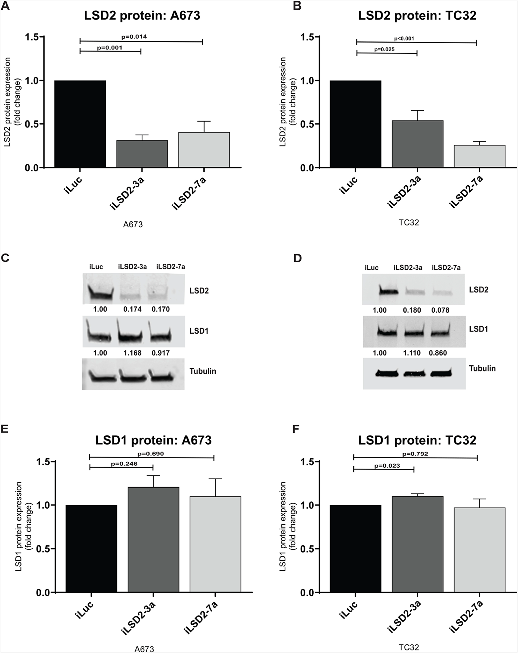 LSD2 protein expression following retroviral knockdown.