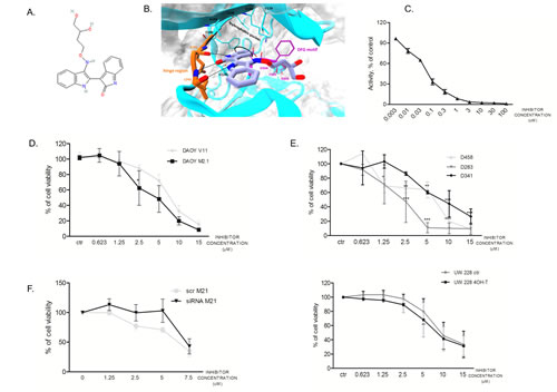Synthesized PCTK1 inhibitor and its effect on MB cell lines.