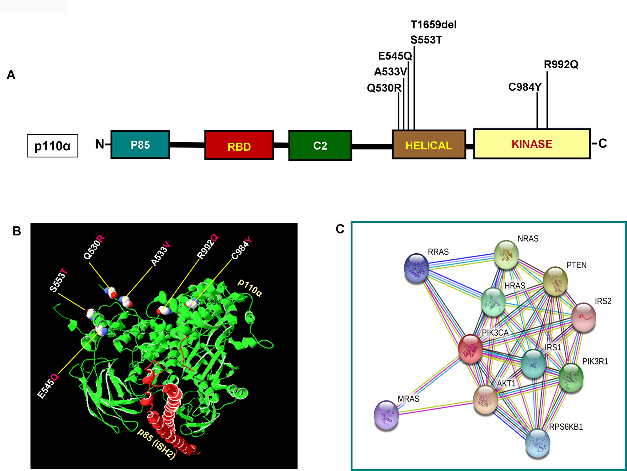Functional domains of p110α and its interactome.
