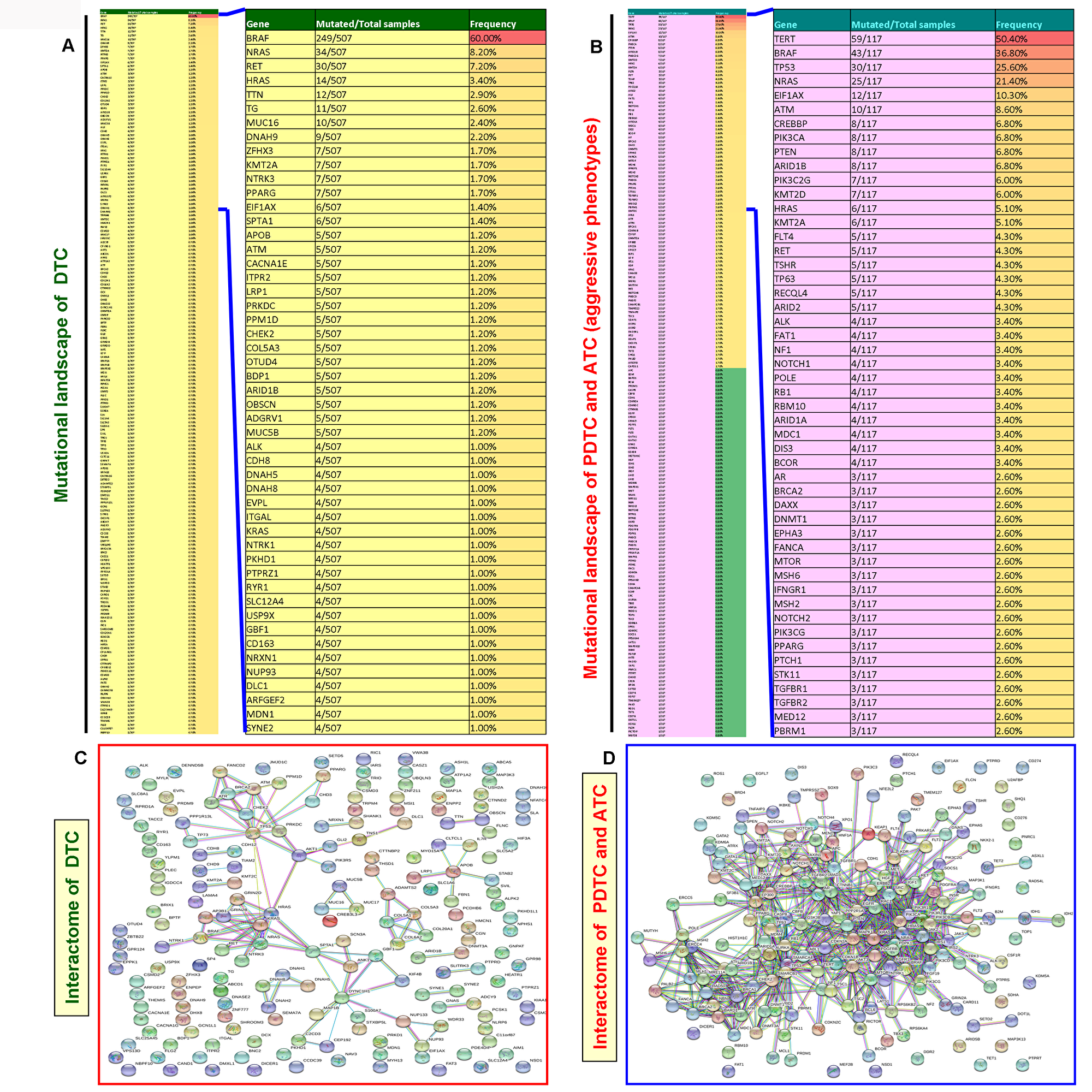 Mutated gene-mediated interactome of DTC and aggressive thyroid cancers (PDTC and ATC).