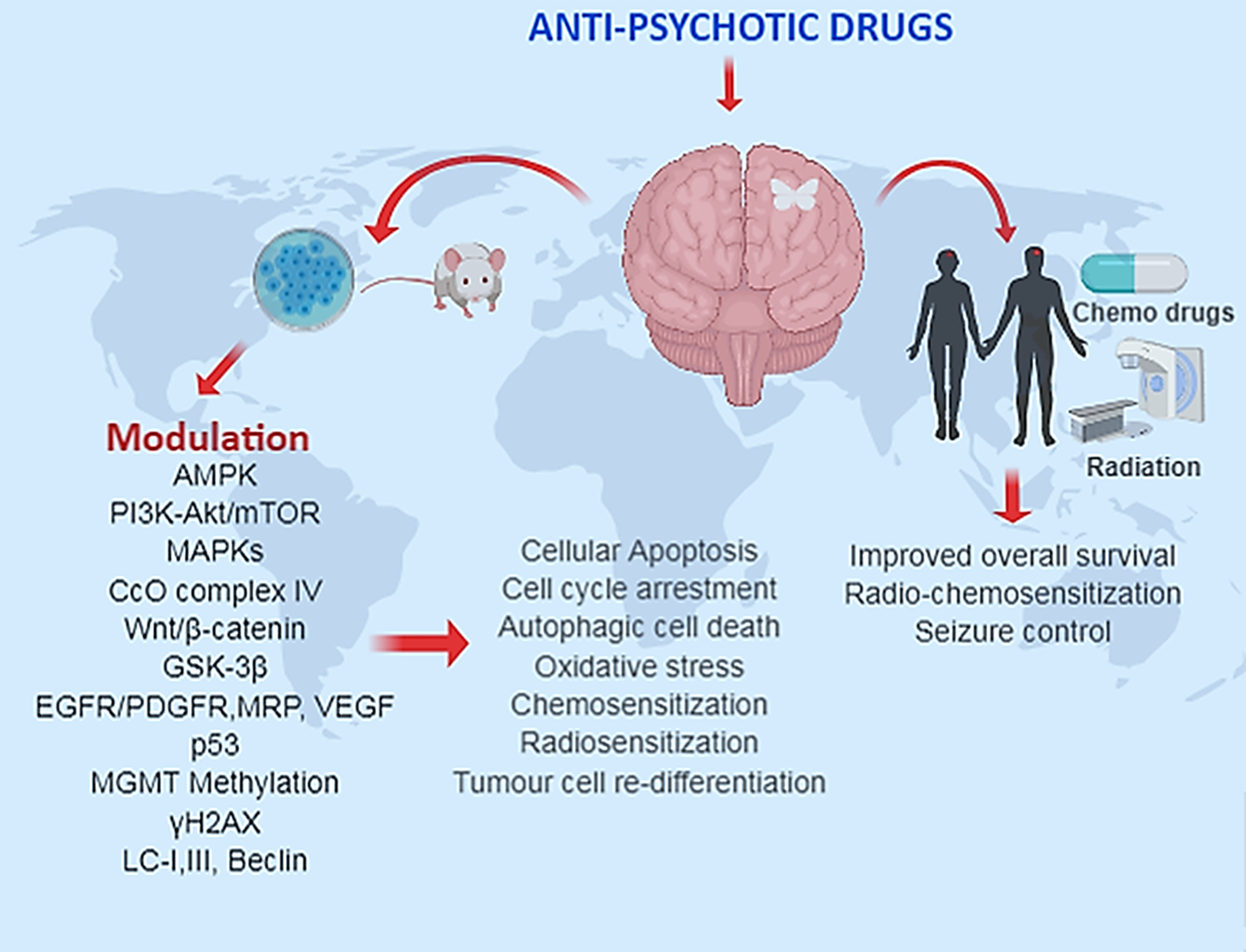 The summarized use of anti-psychotic drugs in preclinical and clinical glioma studies.