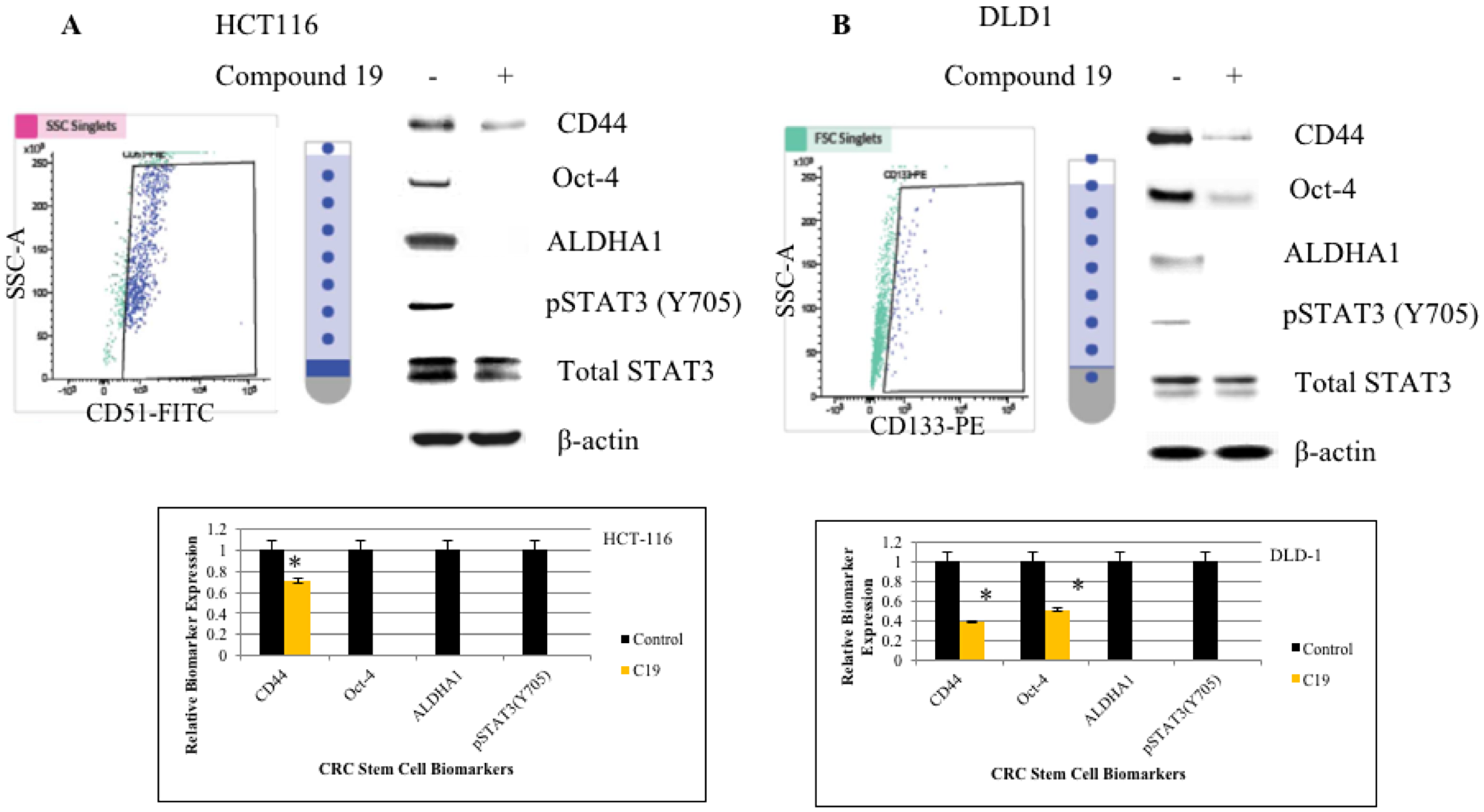 FACS cell sorting of HCT116 and DLD1 and western analyses of cancer stem cell biomarkers.
