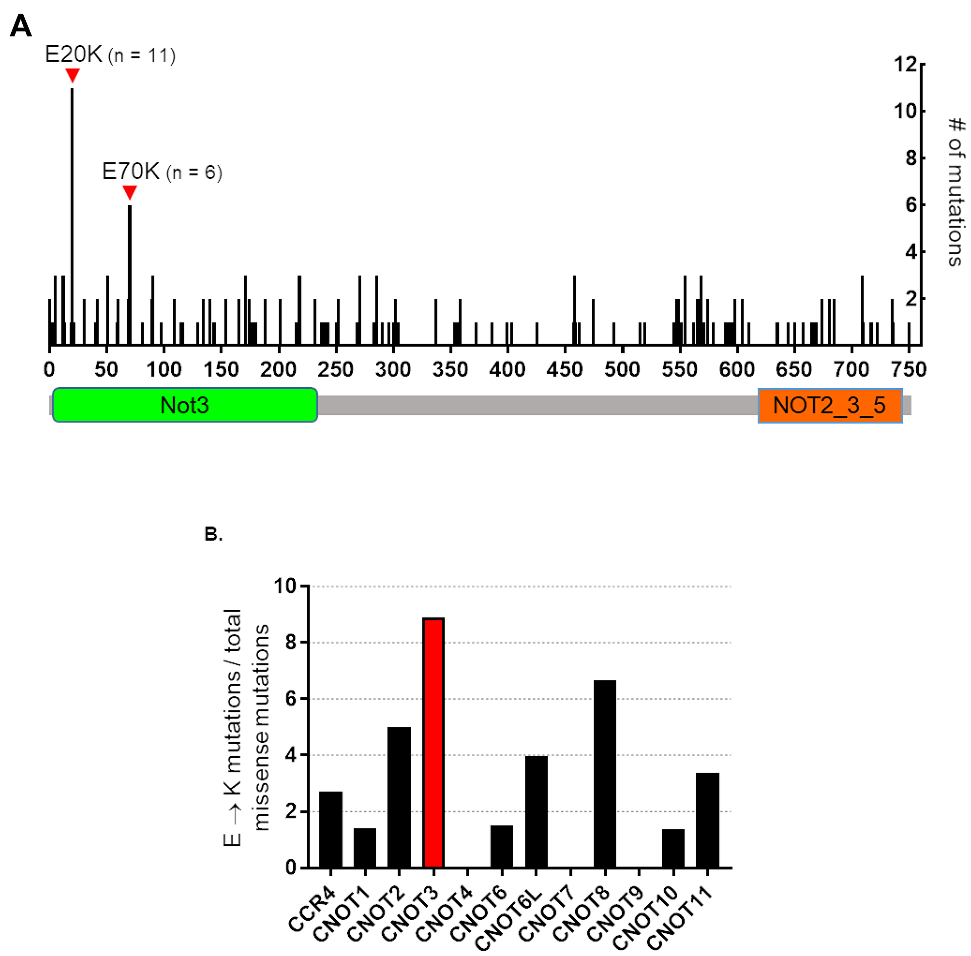 Human CNOT3 E to K mutations in cancer.