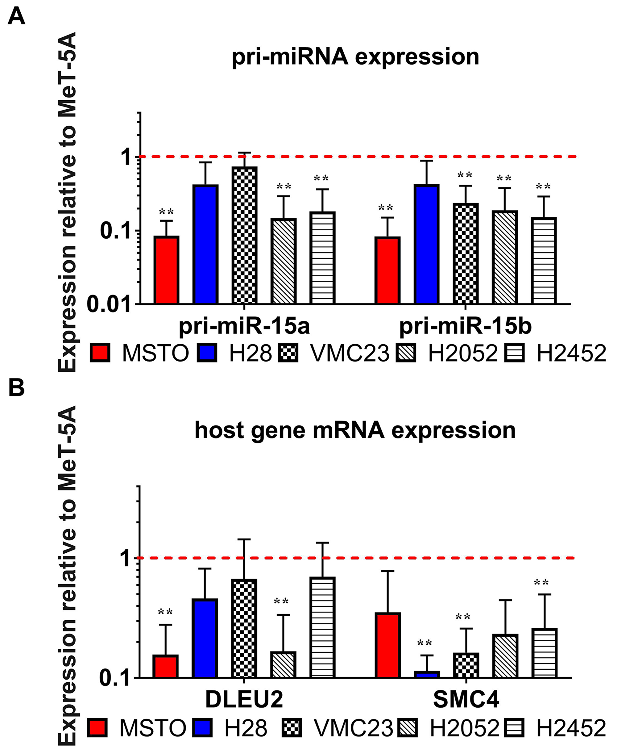 The pattern of expression of miRNA processing intermediates suggest a defect in the transcription of miR-15/16 primary transcripts.