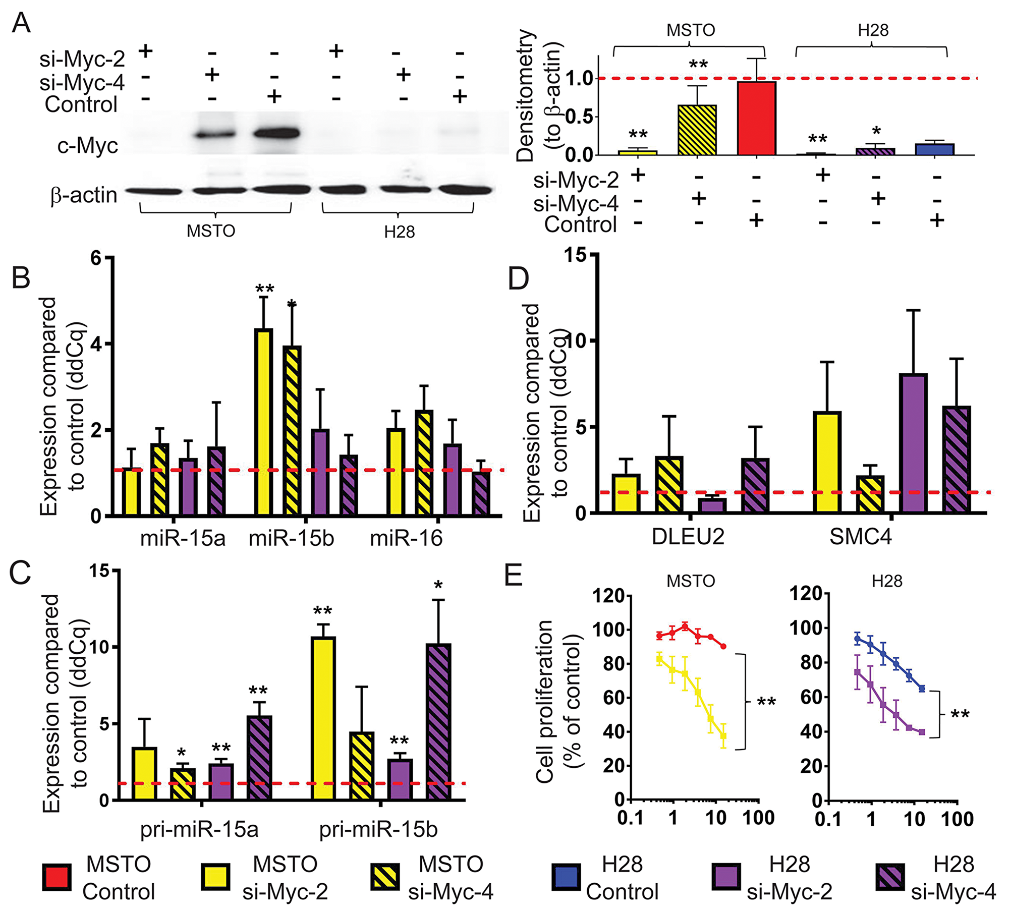 Myc knockdown causes an upregulation of mature miR-15b/16-2 expression and its processing intermediates and inhibits cell growth.
