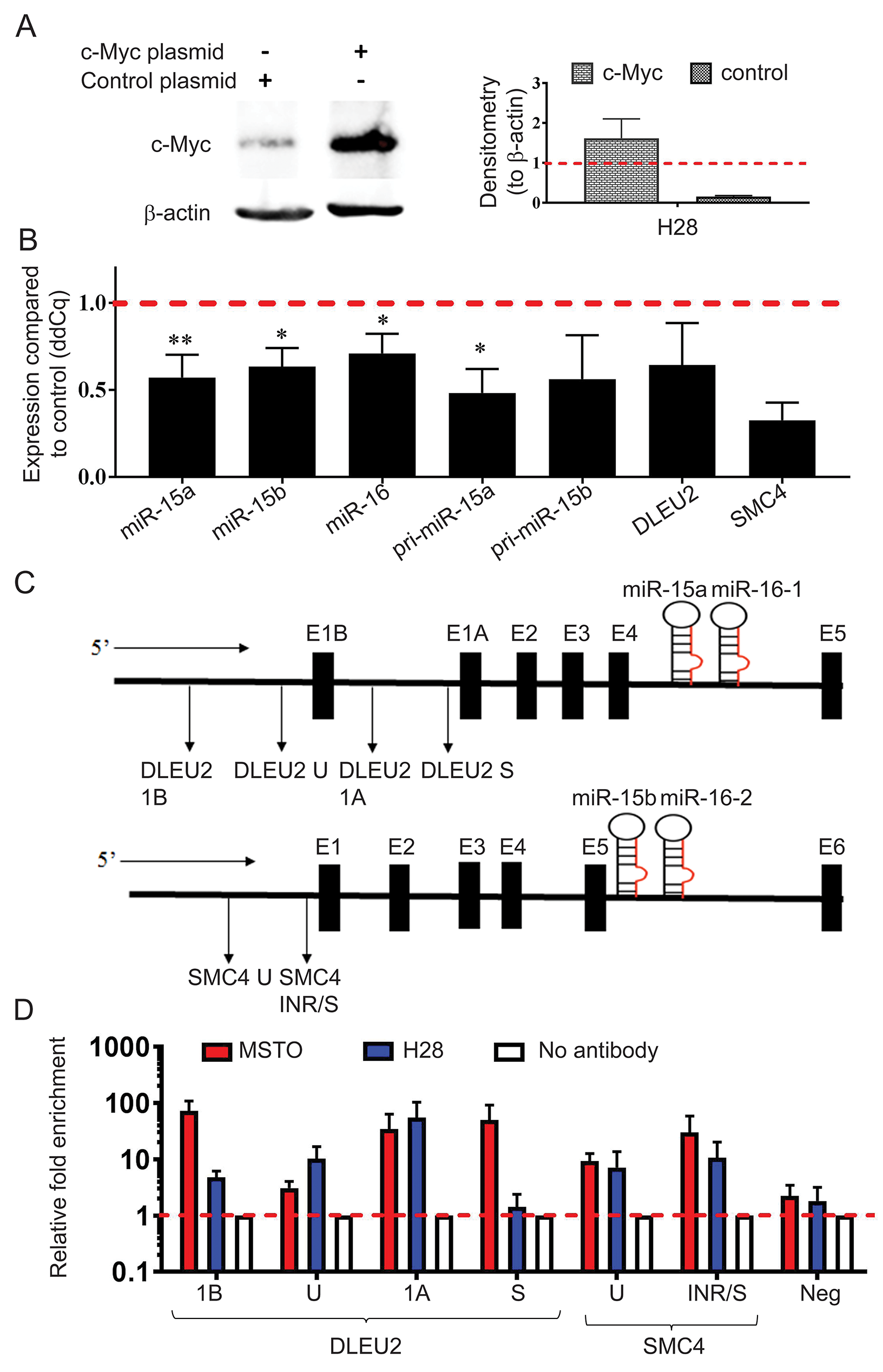 MYC overexpression causes downregulation of miR-15b/16-2 and miR-15a/16-1 and their host genes via binding to the DLEU2 and SMC4 promoters.