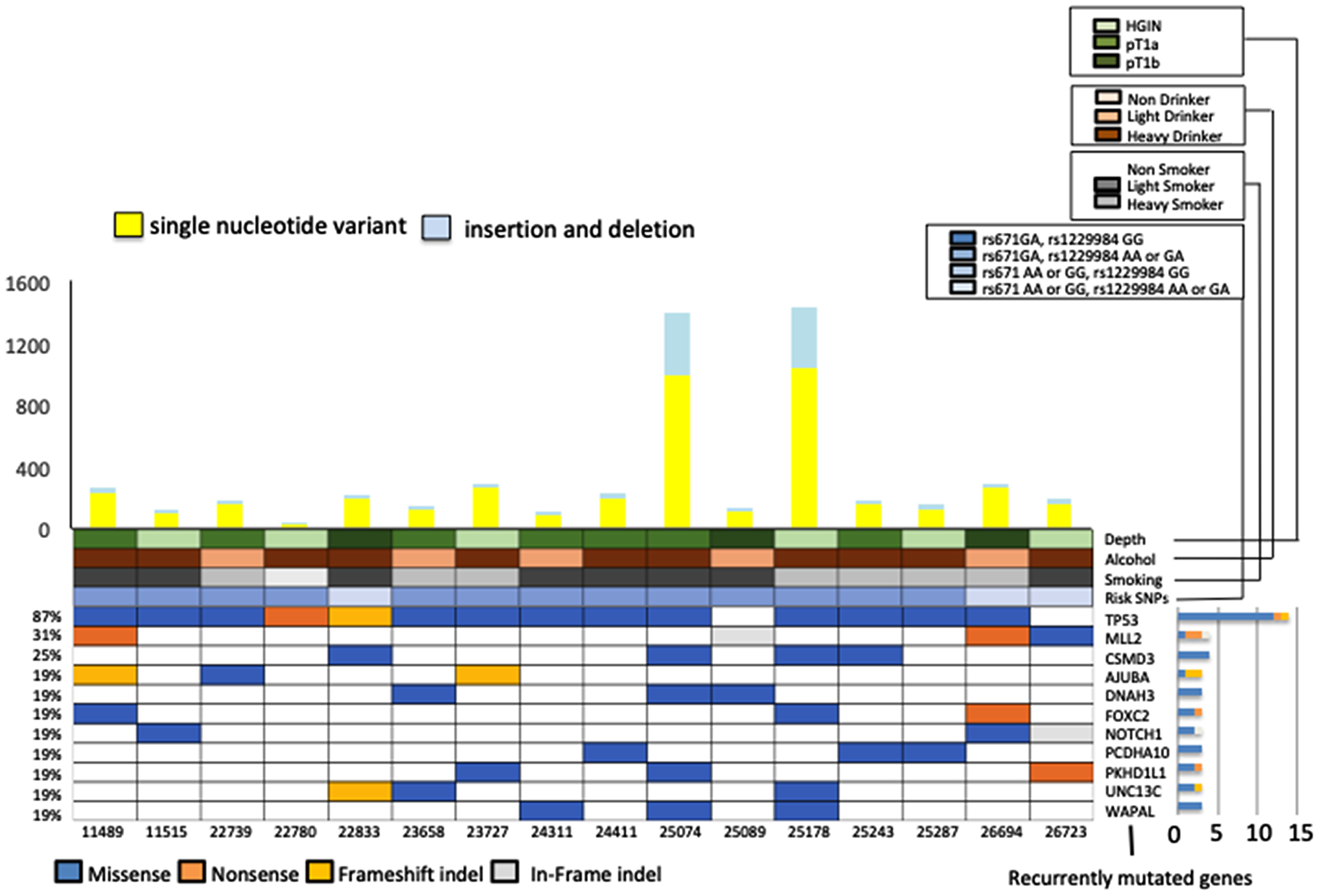 Representative exonic somatic mutations in 16 early-stage esophageal squamous cell carcinoma (ESCC) samples (High-grade intraepithelial neoplasm 6, T1a 7, T1b 3 samples).