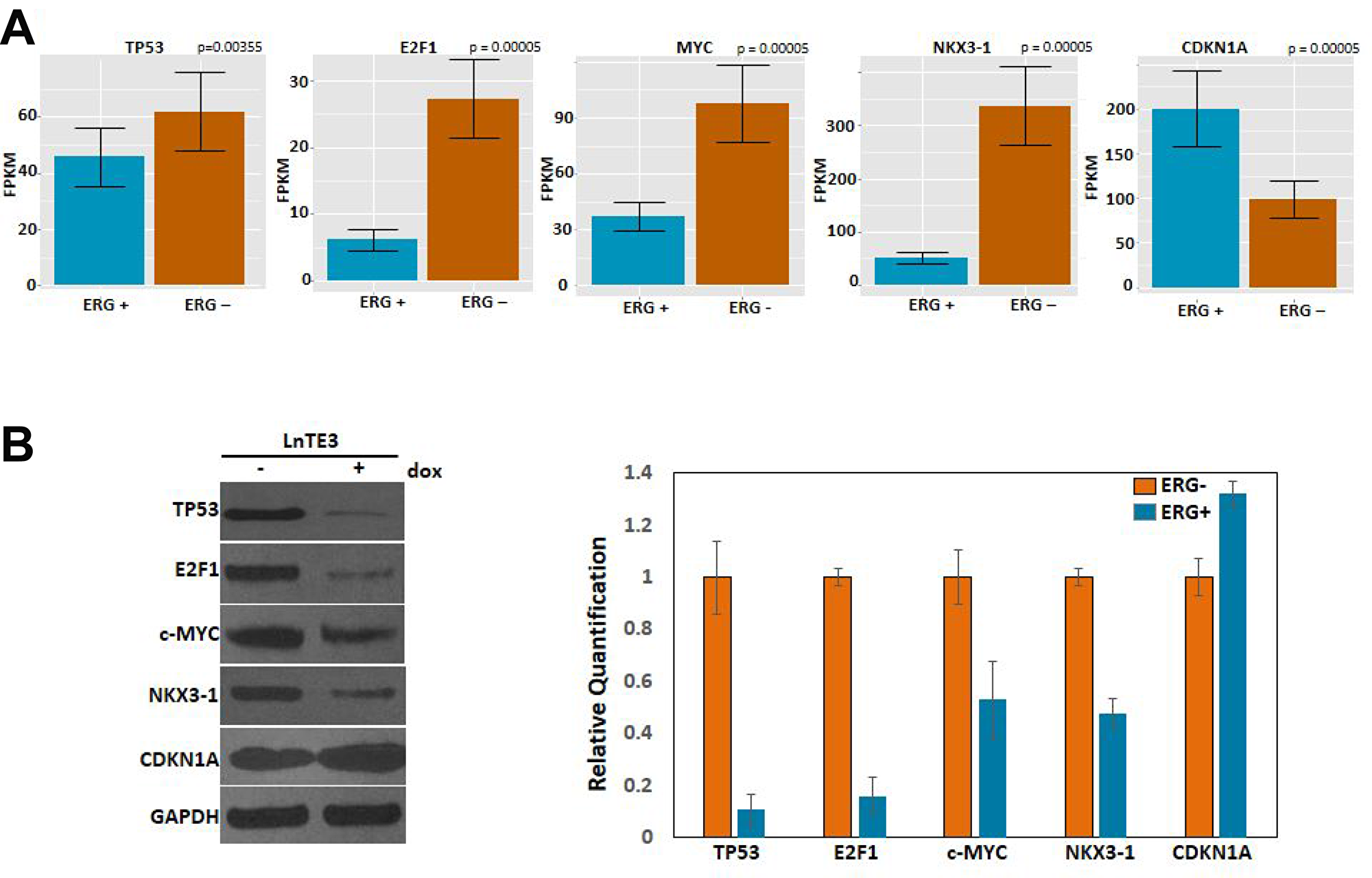 Expression and validation of DEGs.