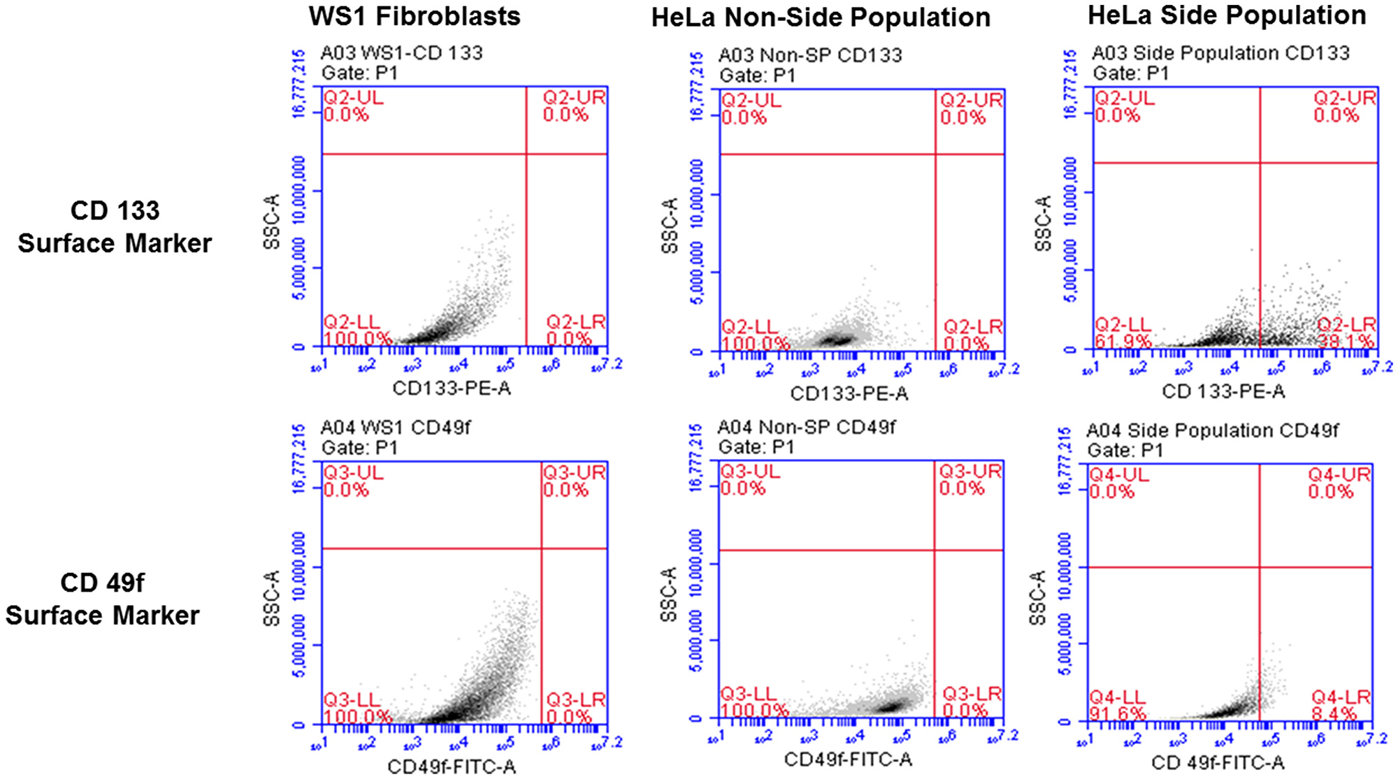 Flow cytometric analysis of cervical side population cells showing surface markers with 38.1% positive for CD133 and 8.4% positive of CD49f. The non-side population as well as the negative control, WS1 fibroblast were negative for both markers.