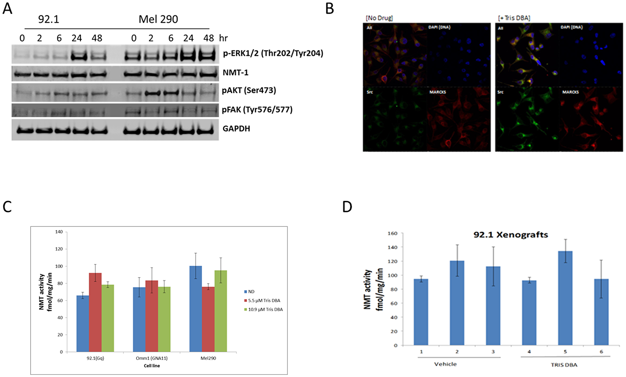 Tris DBA inhibits uveal melanoma tumor growth independent of NMT1.