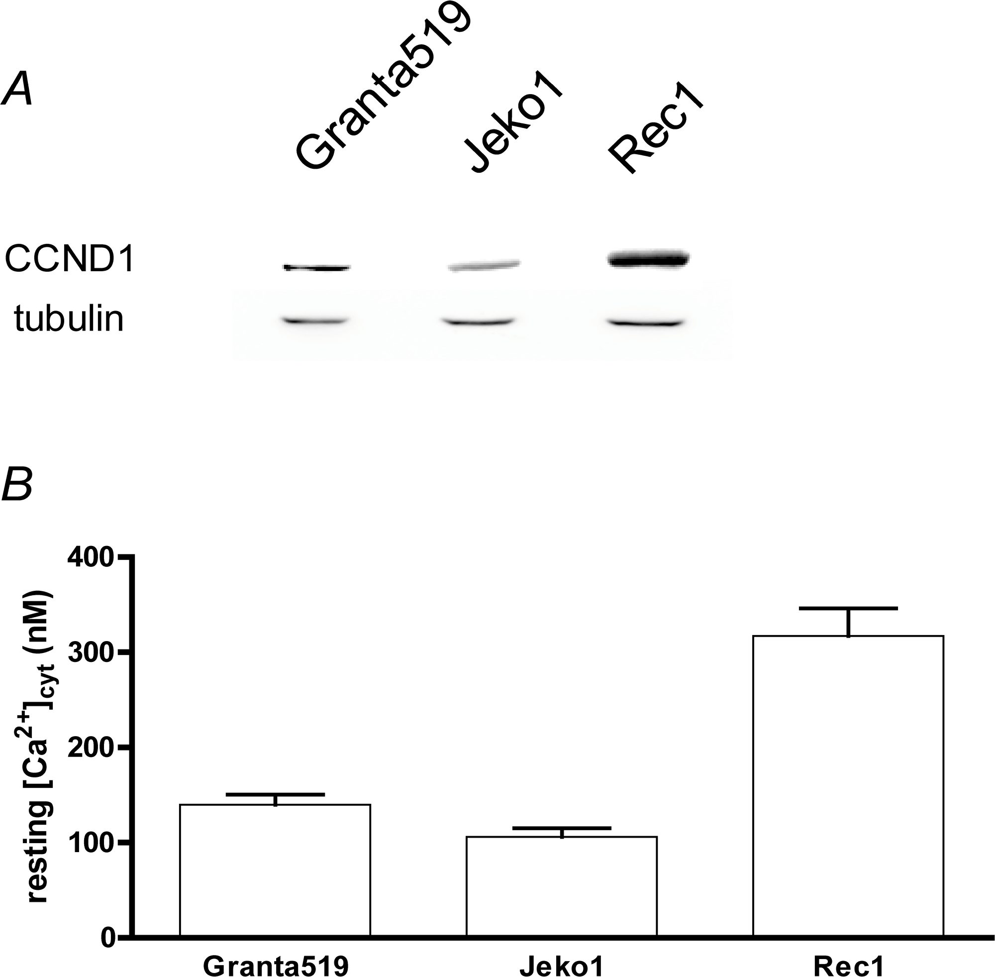 MCL cell lines express Cyclin D1 and can show an increased resting [Ca2+]cyt.