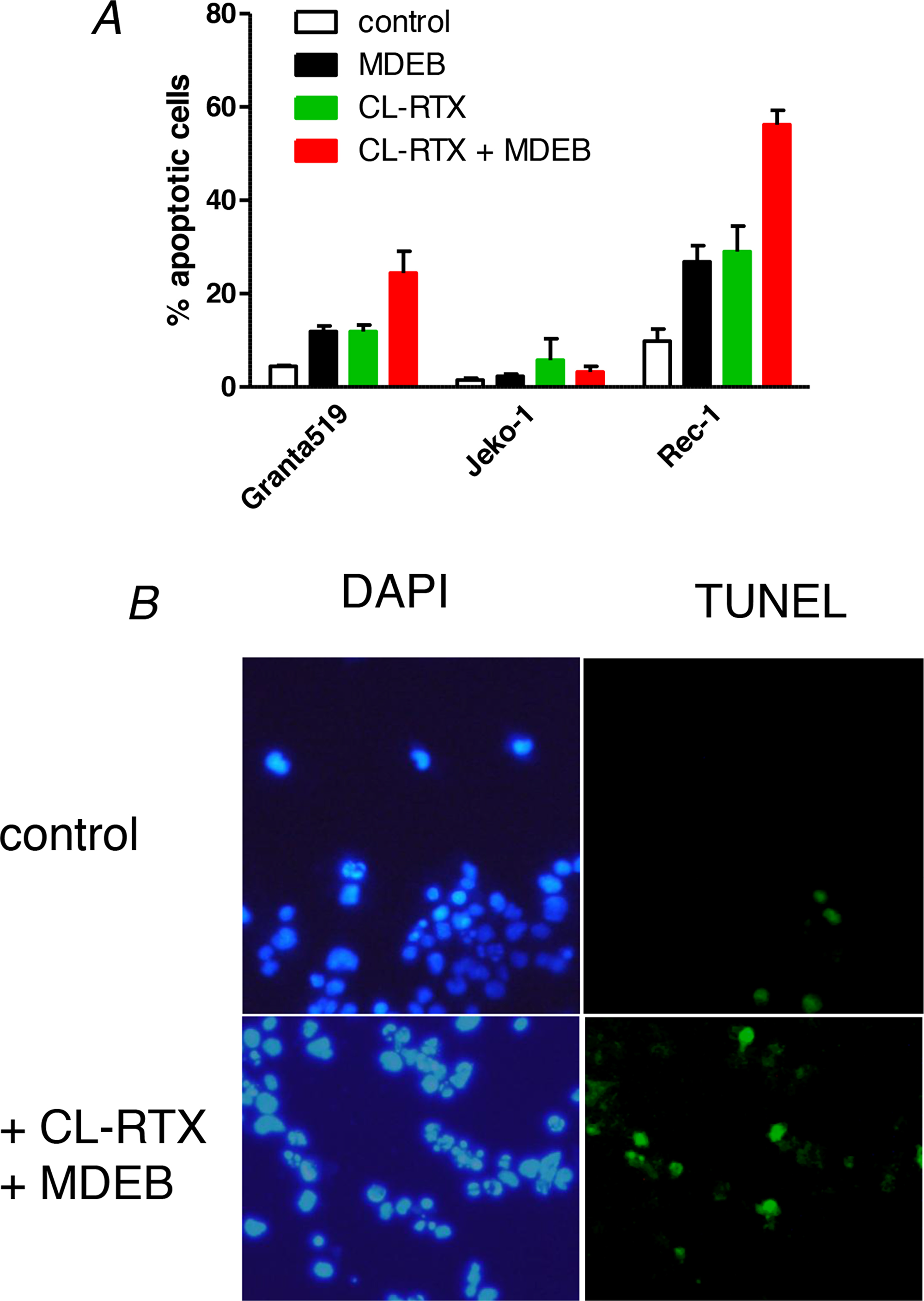 MDEB reinforce RTX-induced apoptosis of RTX-sensitive cell lines.