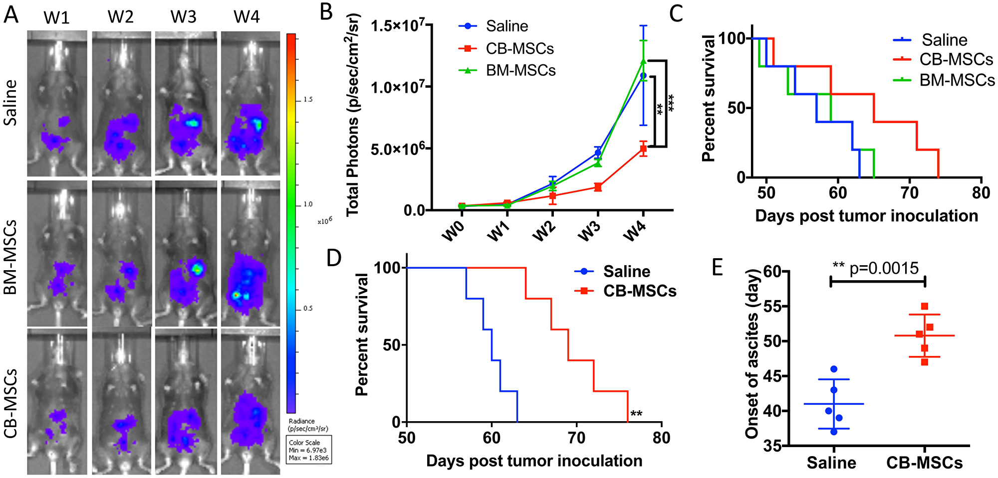 CD90low CB-MSCs inhibited tumor growth and prolonged mouse survival in ovarian cancer model.