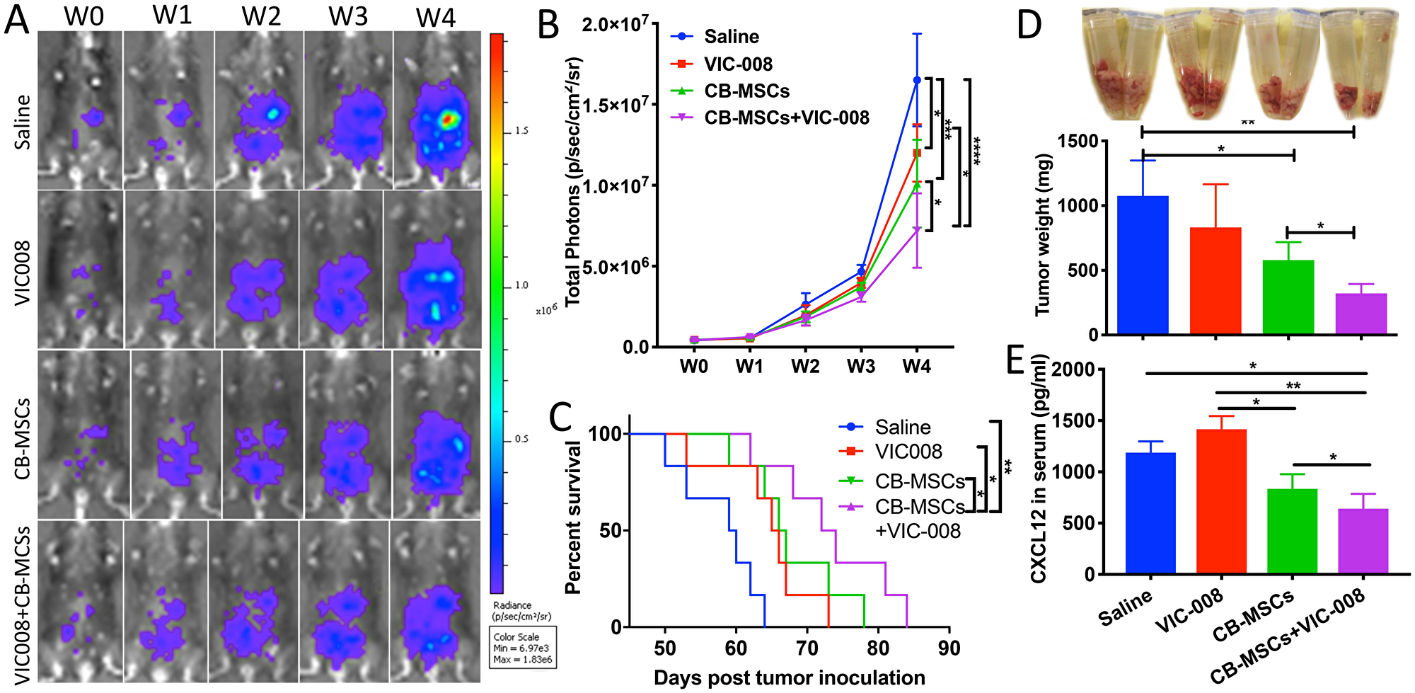 Combination of CD90low CB-MSCs with VIC-008 further improved anti-tumor efficacy.