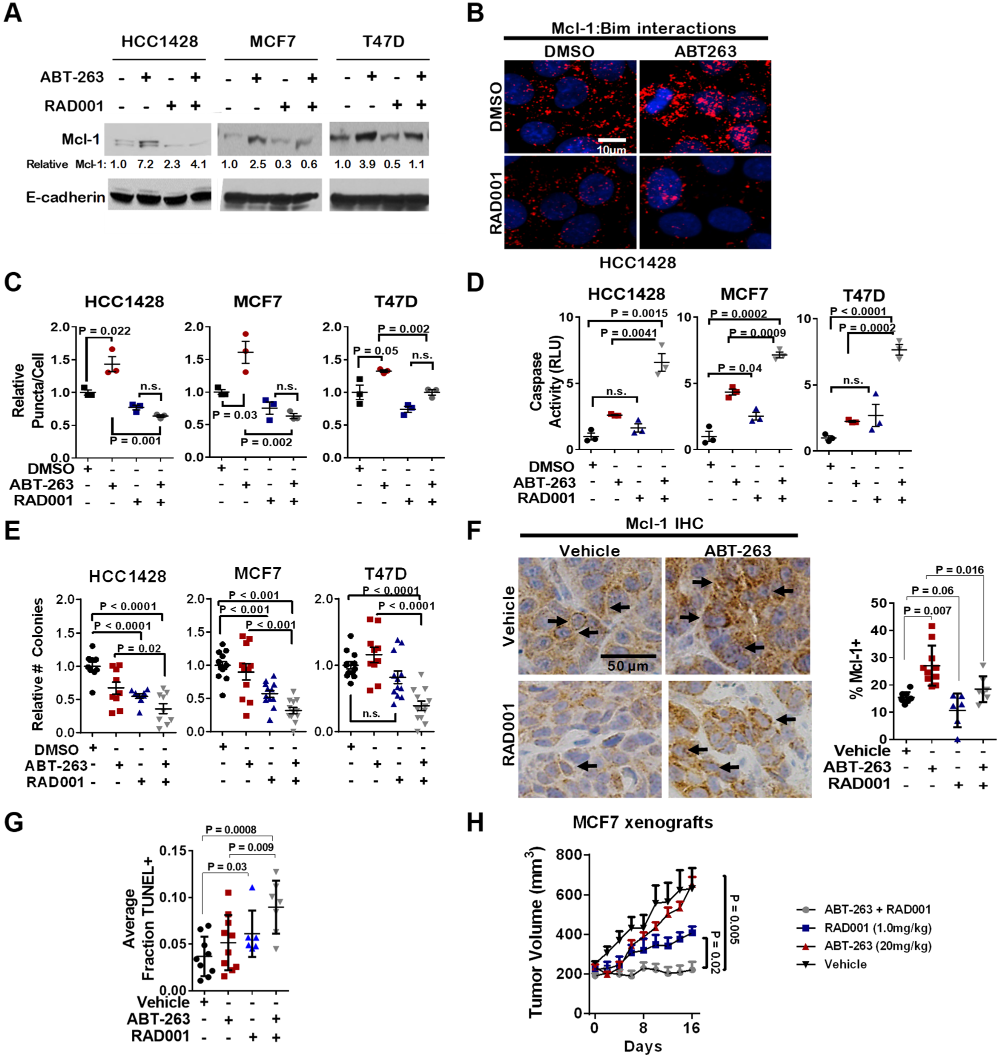 Inhibition of mTORC1 blocks Mcl-1 upregulation in response to ABT-263, and sensitizes ERα+ breast cancers to ABT-263-mediated cell death.