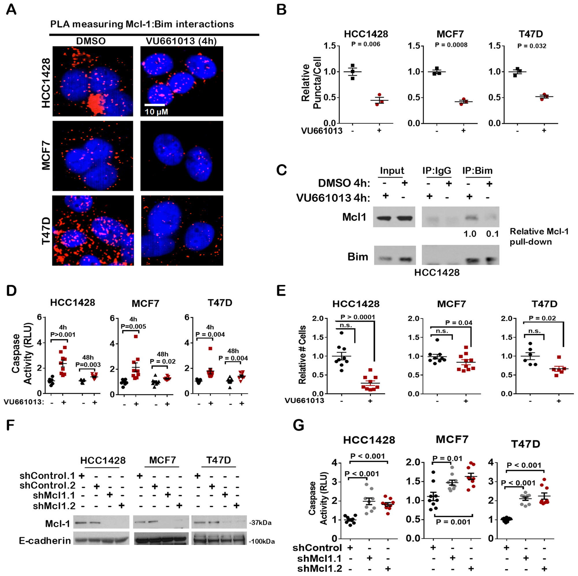 The novel Mcl-1 inhibitor VU-661013 bocks Mcl-1 BIM interaction and induces apoptosis in ER+ breast cancer cells.
