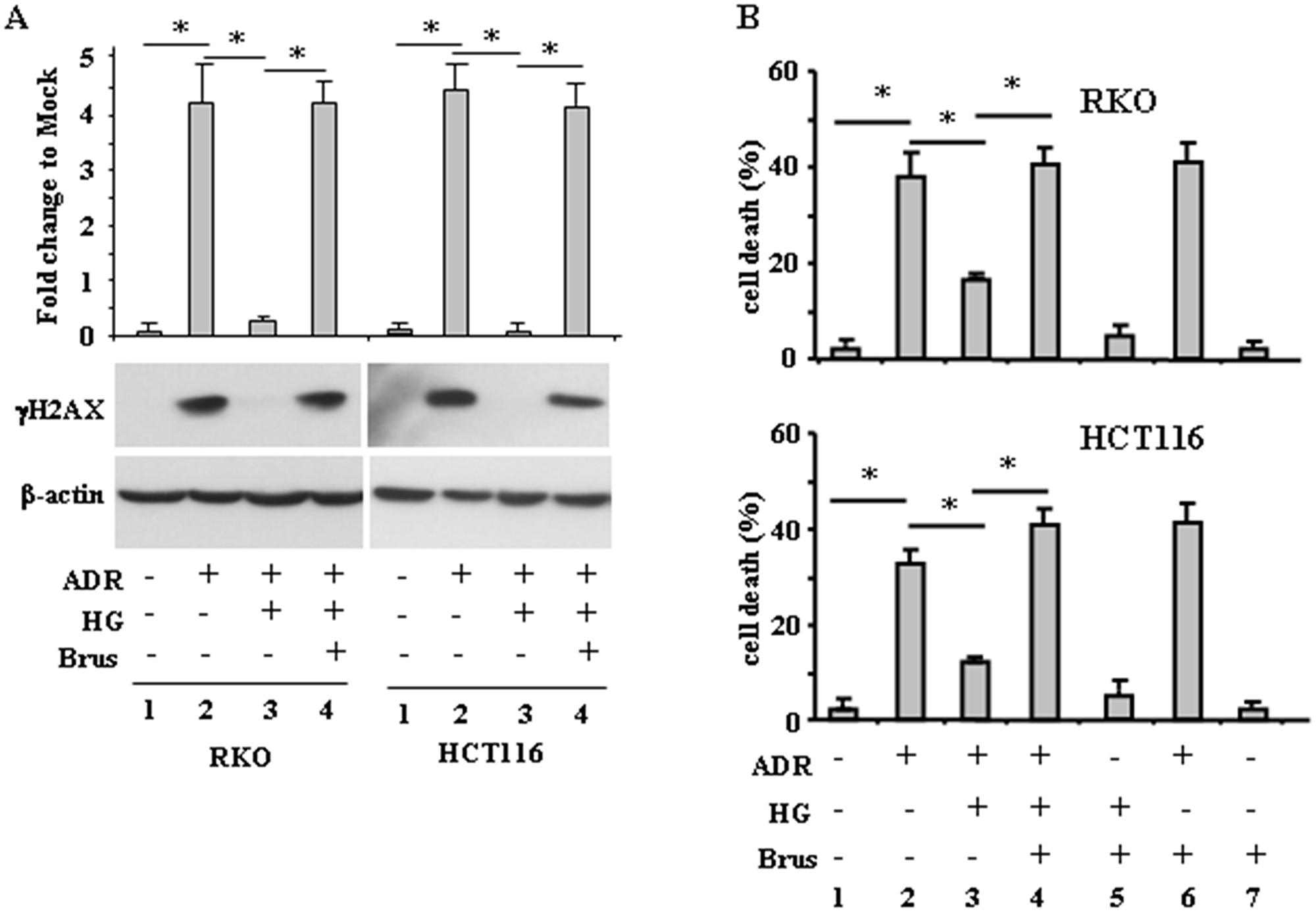Brusatol restores ADR-induced DNA damage and cell death impaired by HG.