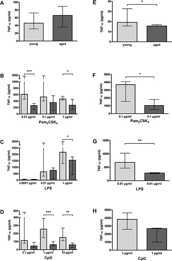TNF-α release by macrophages (A–D) and microglial cells (E–H) from young and aged mice in vitro.