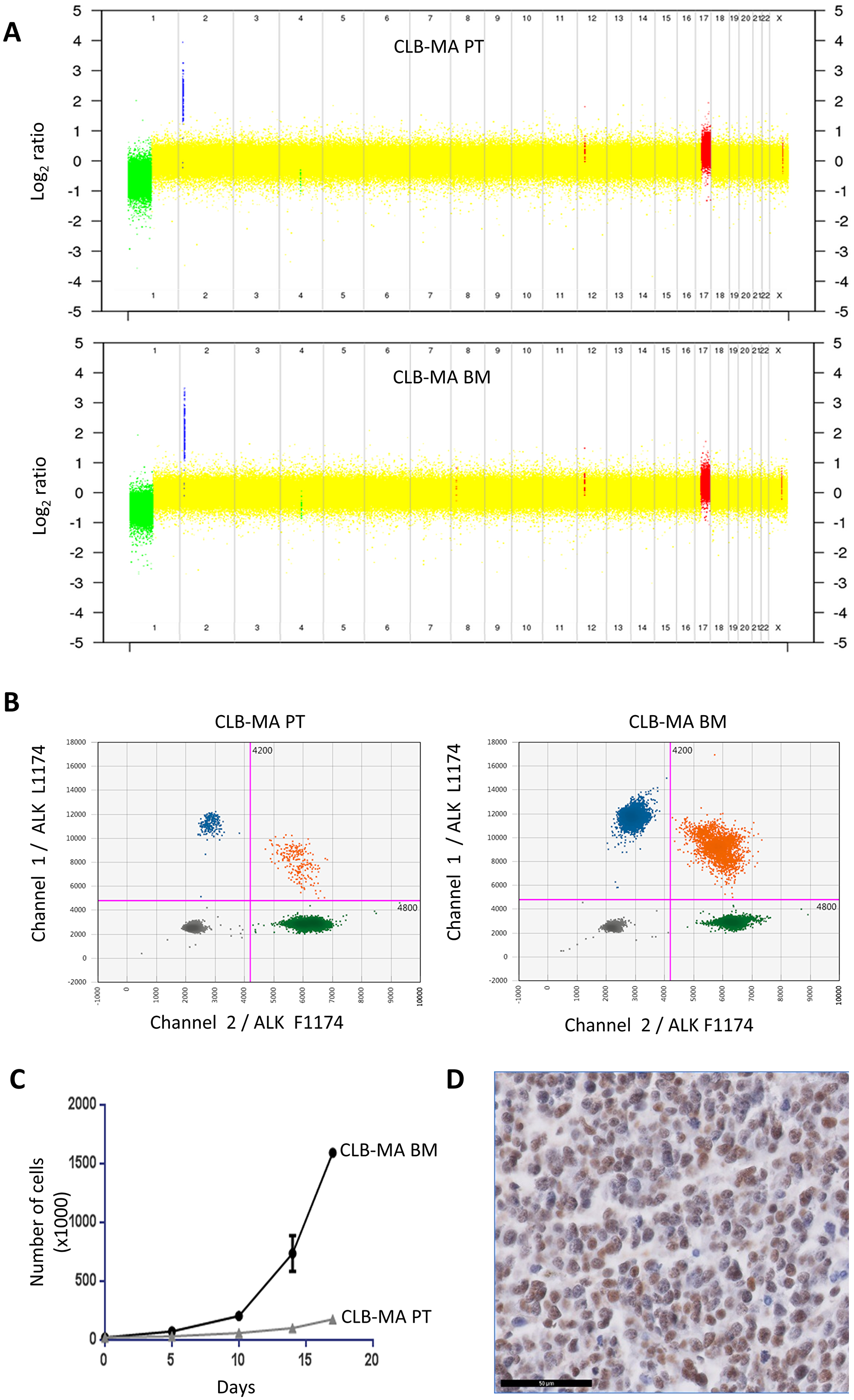 Genomic alterations and growth of the CLB-MA PT and CLB-MA BM neuroblastoma cell lines.