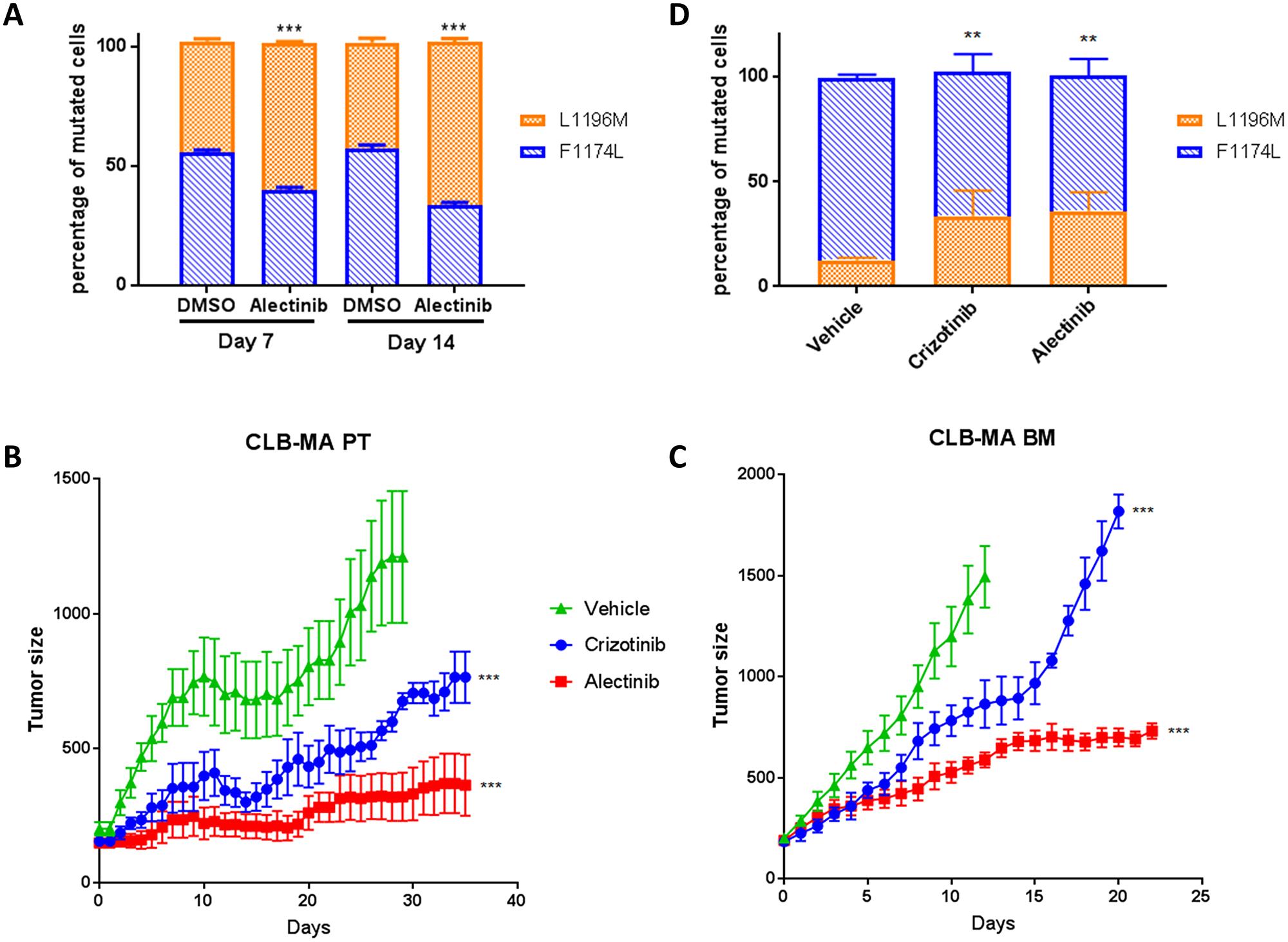 Sensitivity of ALK F1174L and L1196M mutations to ALK inhibitors in vitro and in vivo.