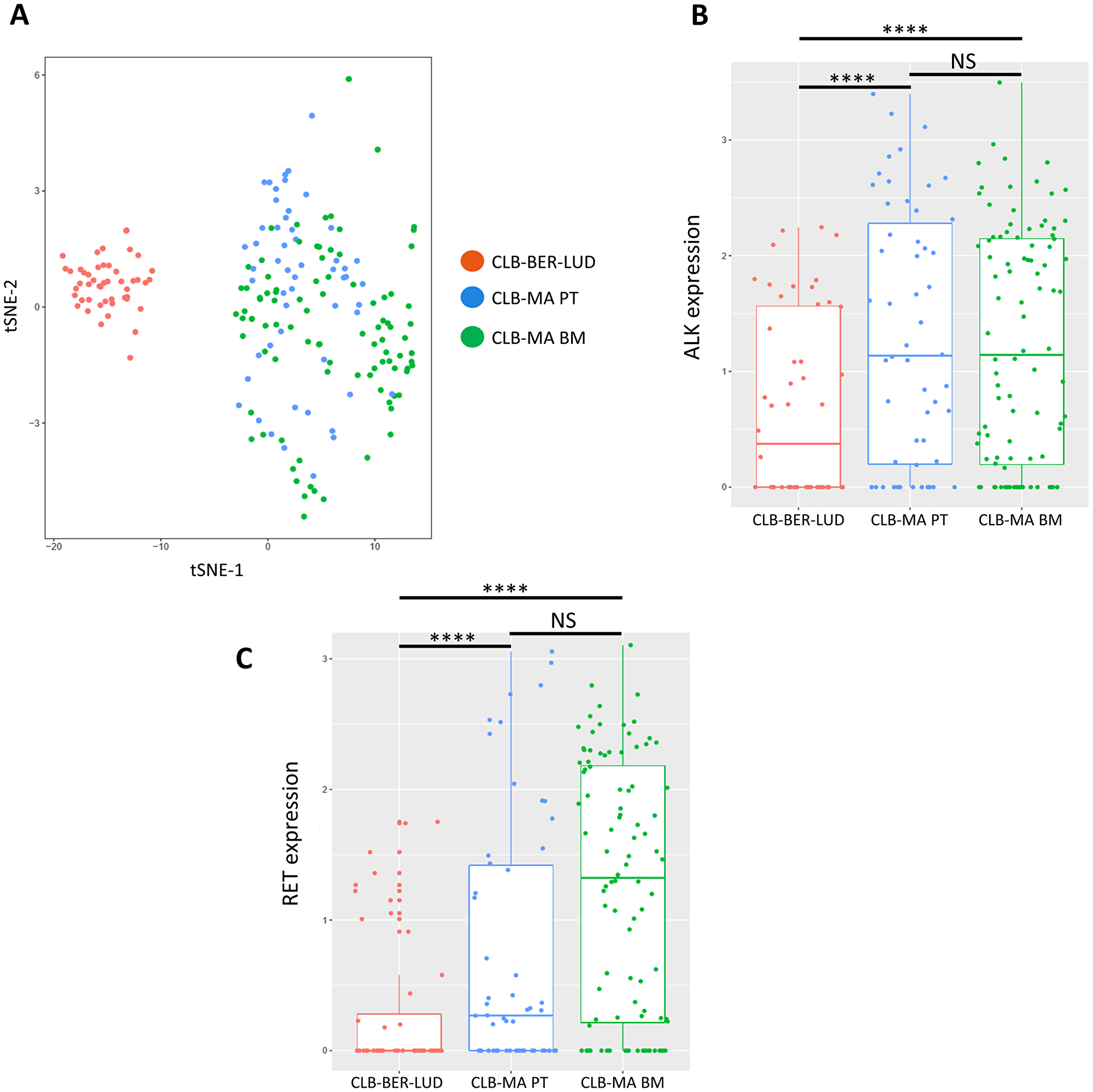 Single-cell RNA-seq analysis on CLB-MA PT and CLB-MA BM cell lines.