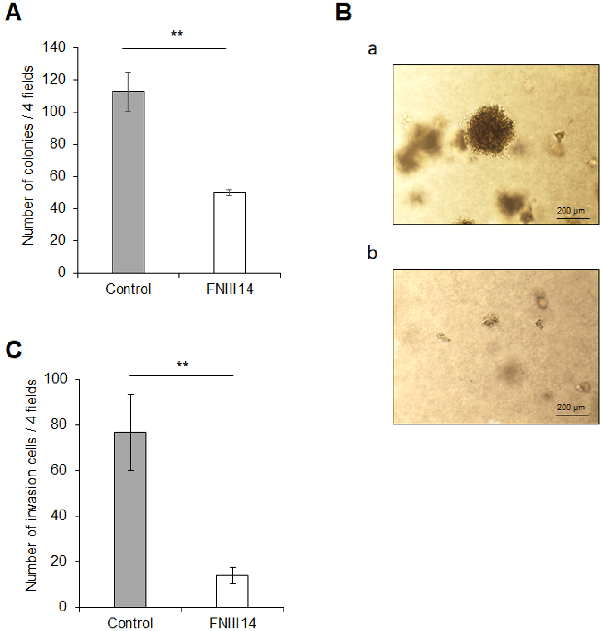 FNIII14 has the ability to attenuate cancer-related malignant properties.