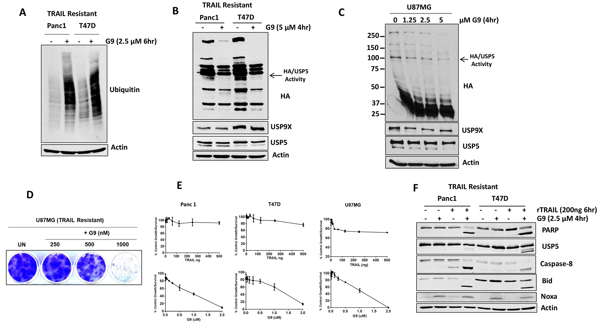 USP5 inhibition overcomes acquired resistance to TRAIL.
