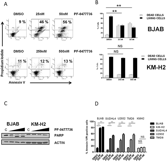PF-0477736 induces cell death by apoptosis in DLBCL cell lines.