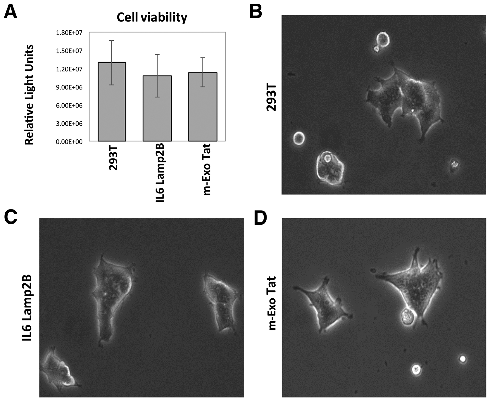 Physiological and morphological characteristics of the 293T and the transfected IL16 Lamp2B and m-EXO Tat cell lines.