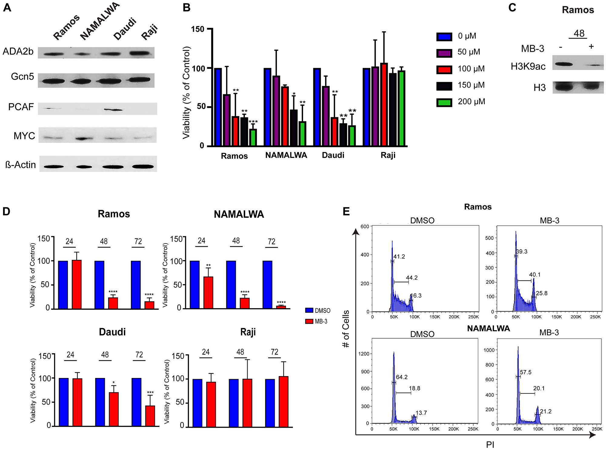 GCN5 HAT Inhibition Reduces Viability of human Burkitt lymphoma cell lines.