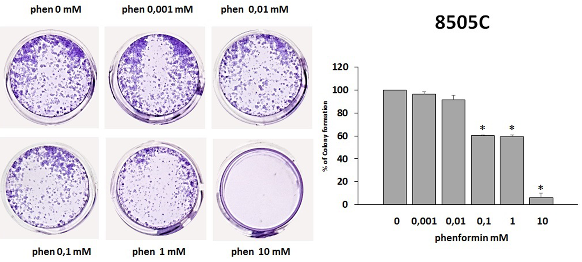 Effects of phenformin on 8505C cells ability to form colonies.