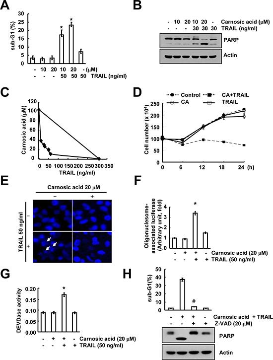 Carnosic acid sensitizes Caki cells to TRAIL-mediated apoptosis.