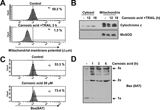Effect of carnosic acid on mitochondria membrane potential.