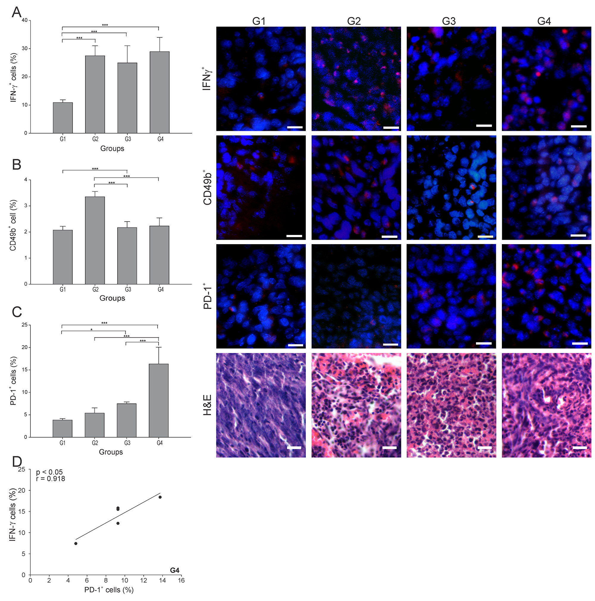 ConvitVax/anti-PD-1 combined treatment induces a marked PD-1+ cells infiltration in 4T1 tumors.
