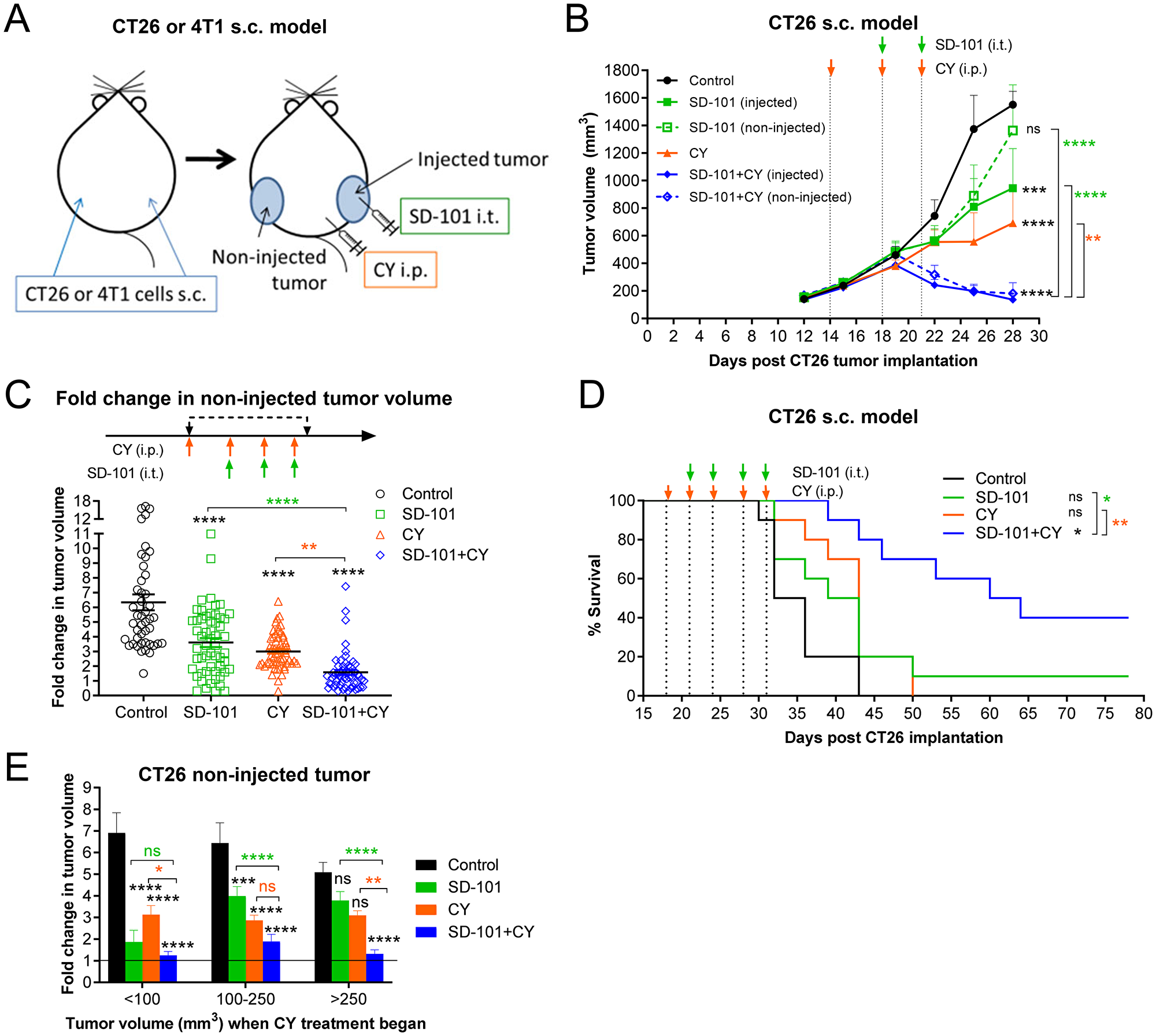 Intratumoral SD-101 combined with low-dose CY effectively inhibits growth of both injected and non-injected tumor sites and promotes survival.