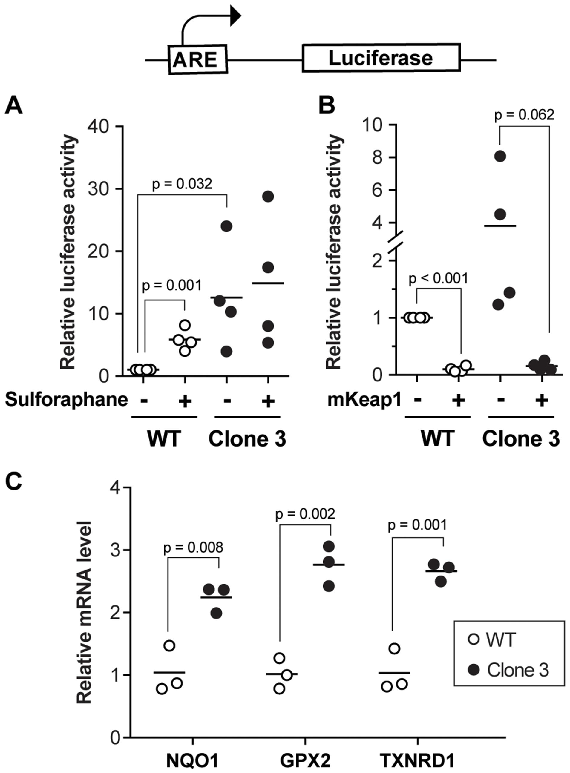 Defective regulation of Nrf2 target genes in KEAP1-disrupted cells.