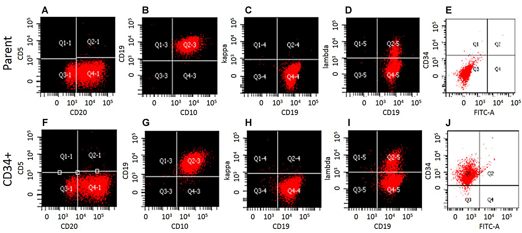 Phenotypic characterization of WSU-WM-CD34+ subset cells.