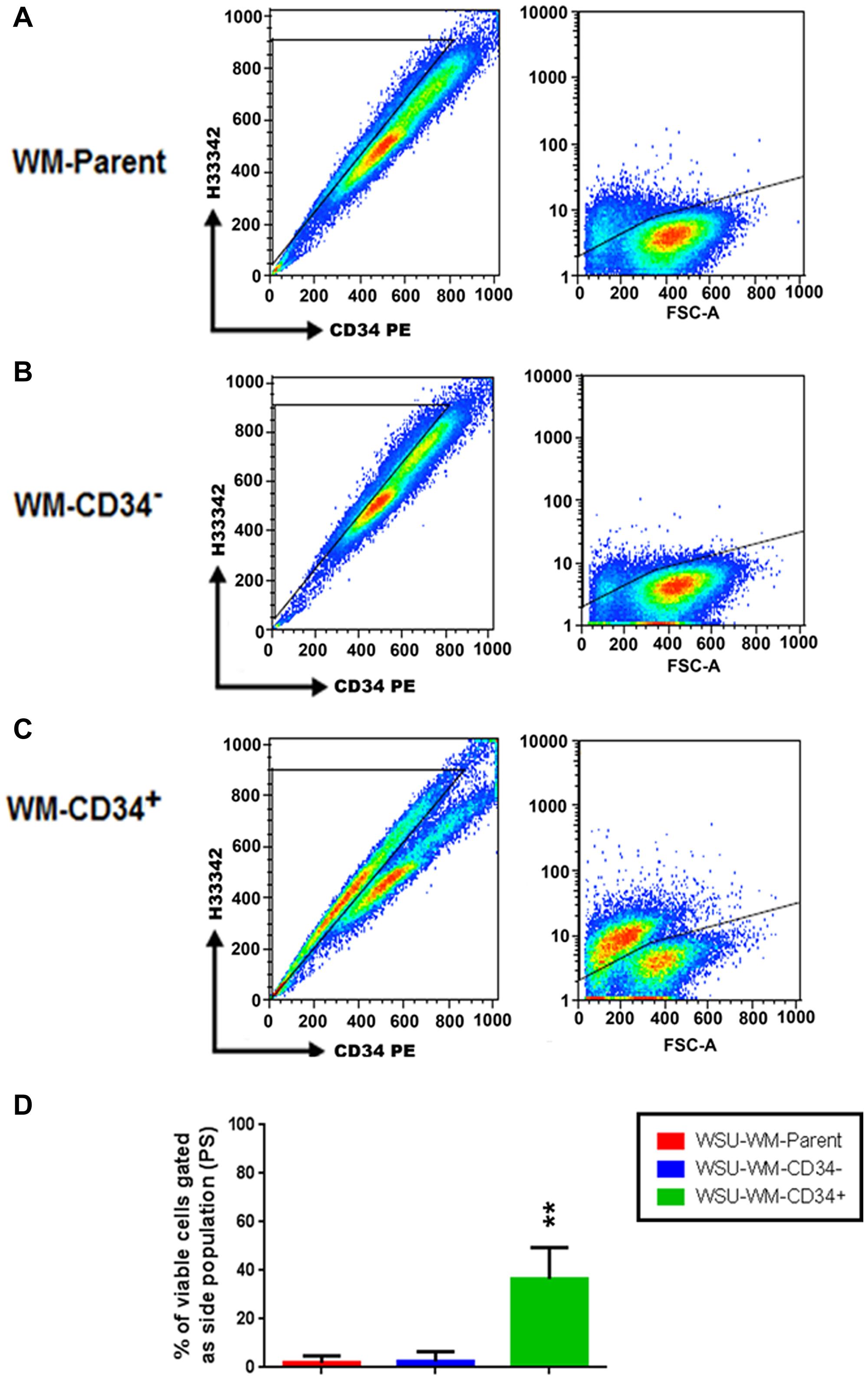 Detection of a side population (SP) in WSU-WM.