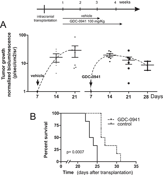 GDC-0941 inhibits tumour growth in vivo and prolongs the event-free survival of mice bearing intercranial medulloblastomas.