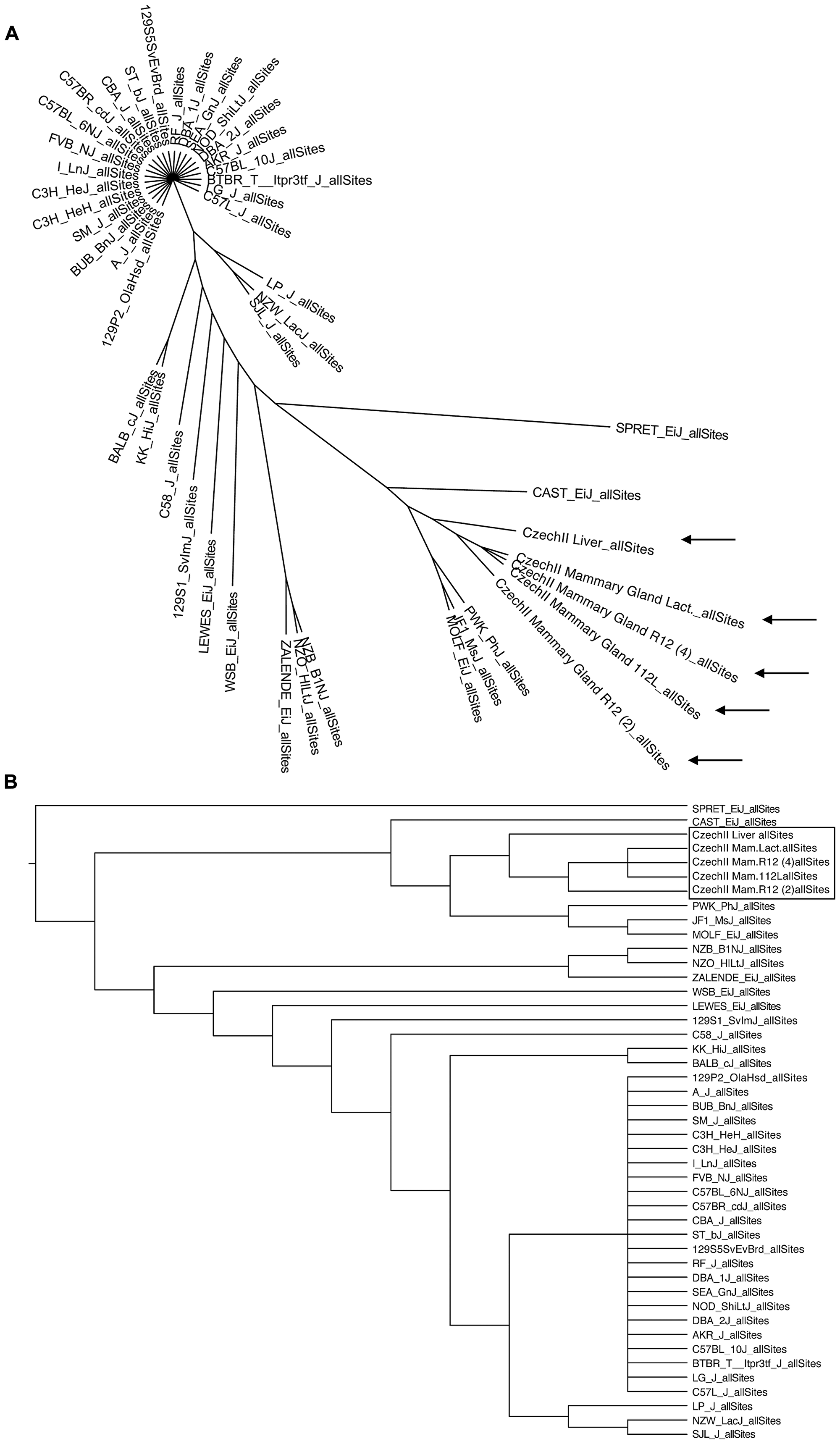 Phylogenetic mapping of CzechII mouse strain.